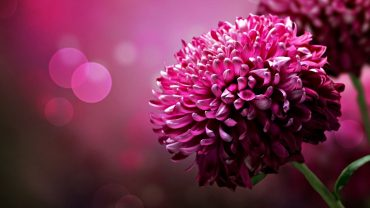 Free HD Flowers Wallpaper