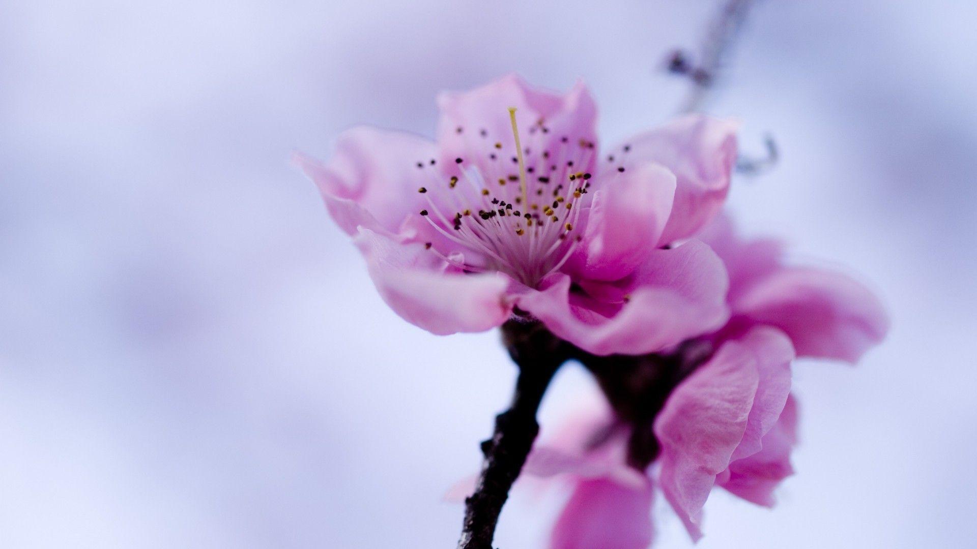 Flower Image Hd