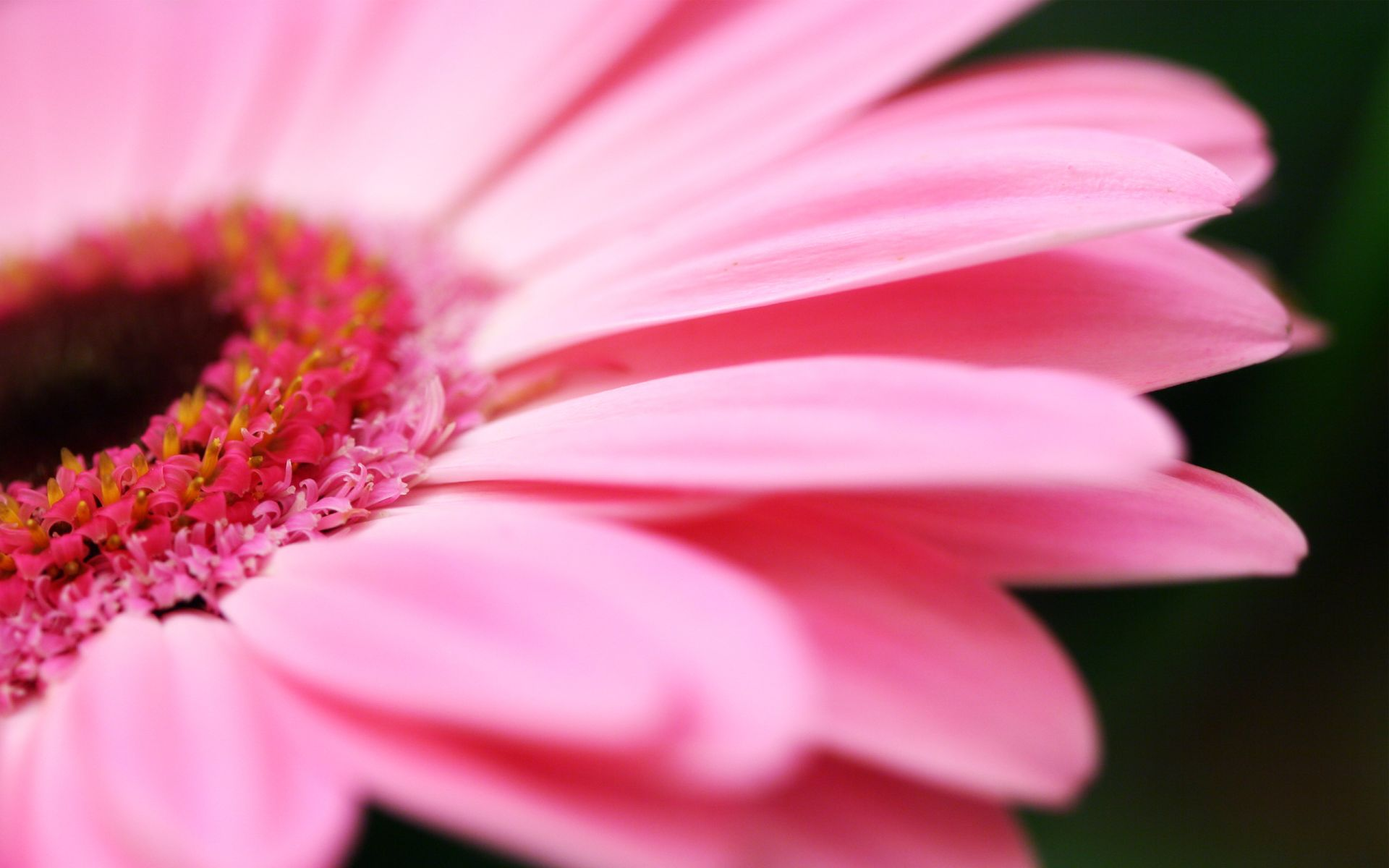 cute flowers images and wallpapers Download