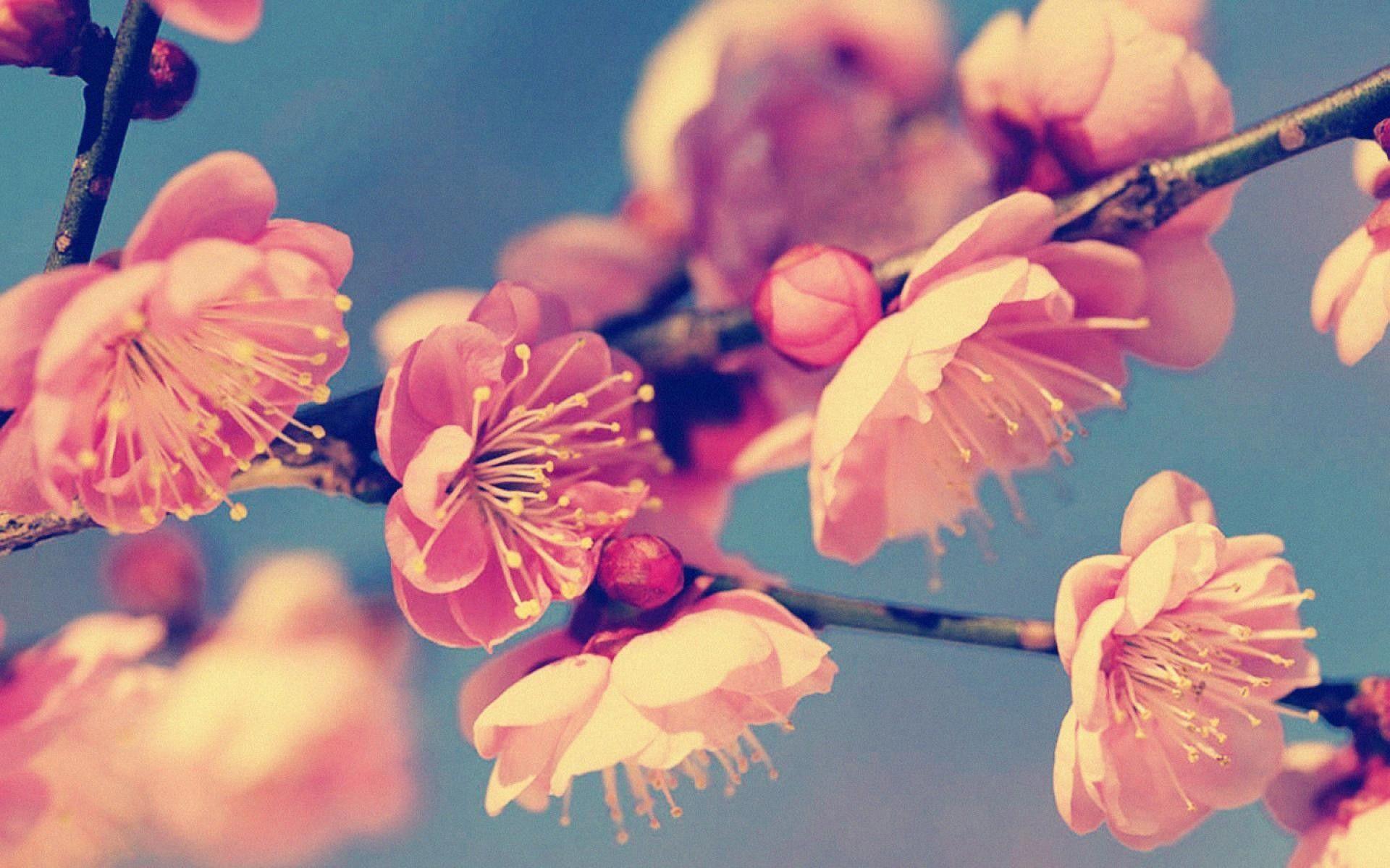 Flower Hd Wallpaper Free Download