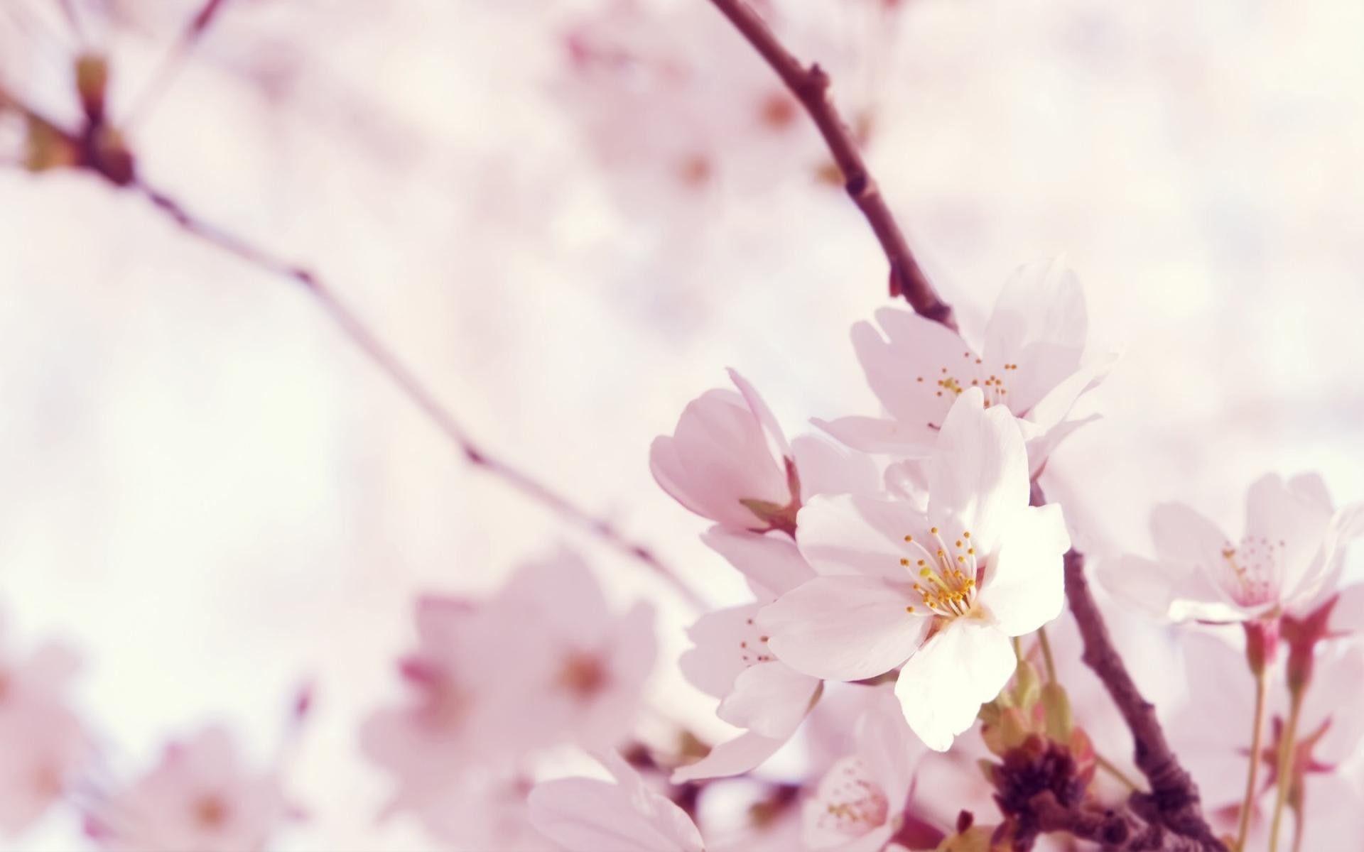 Full HD 1080p Flowers Wallpapers, Desktop Backgrounds HD