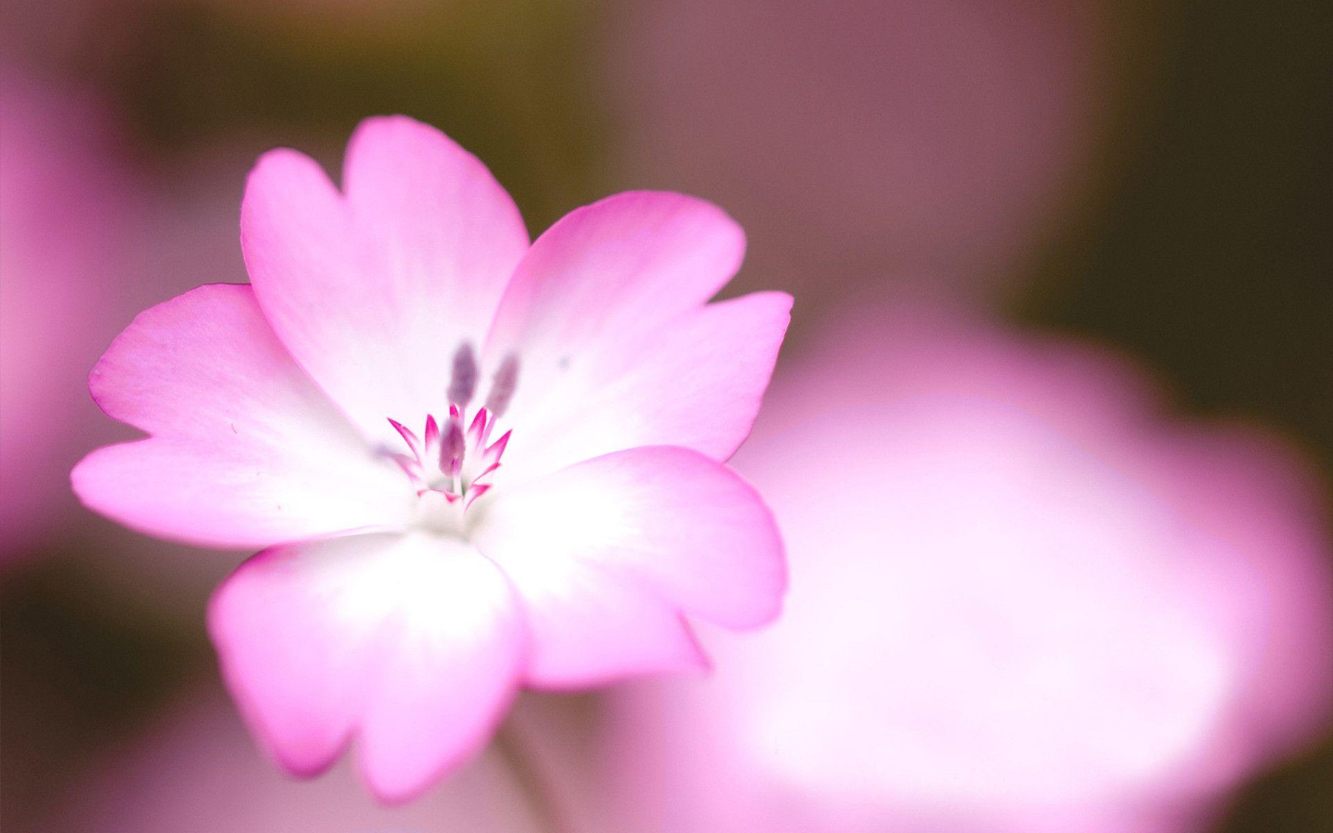 Flowers Amazing Flower 1920x1200