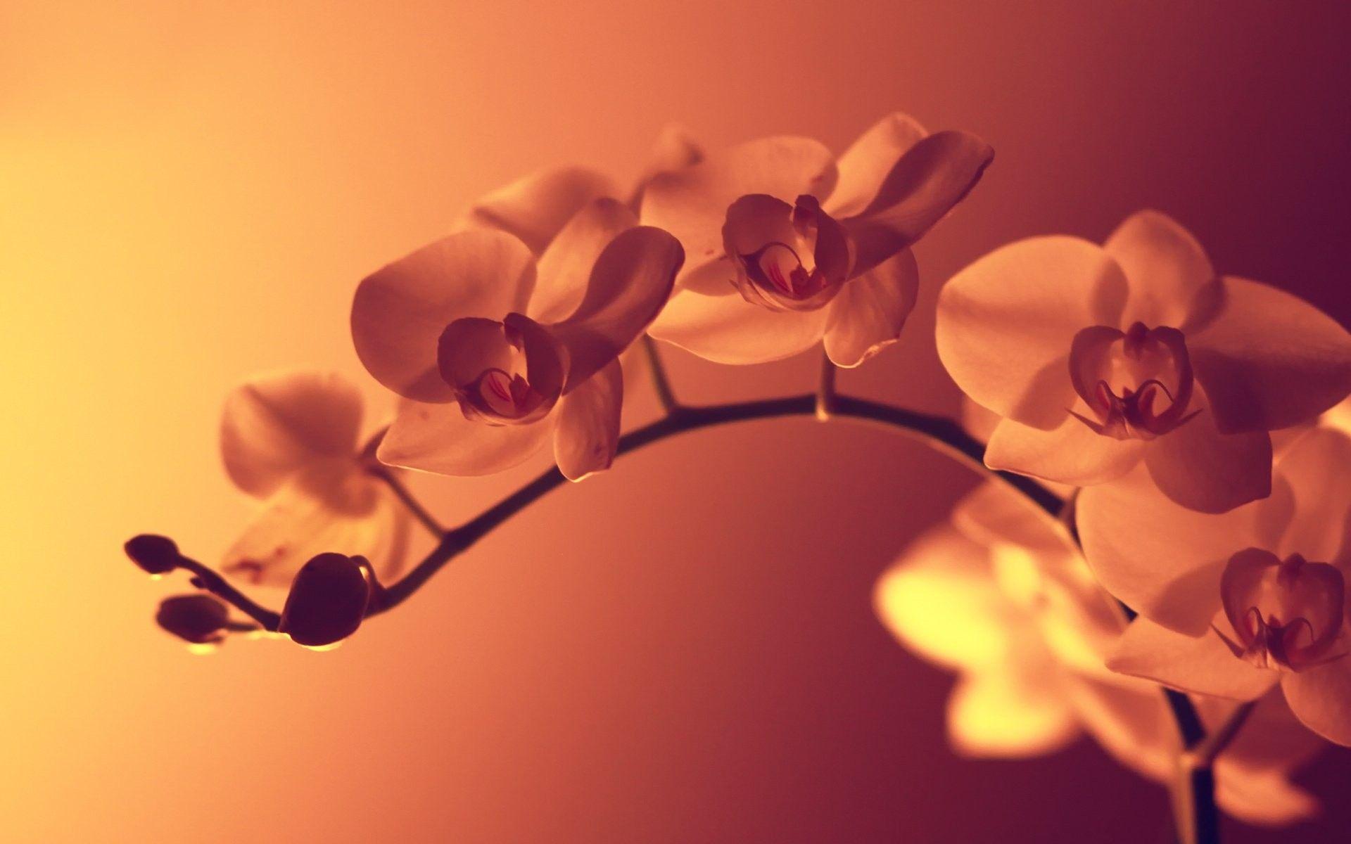 Hd flower wallpaper download 3d hd pictures