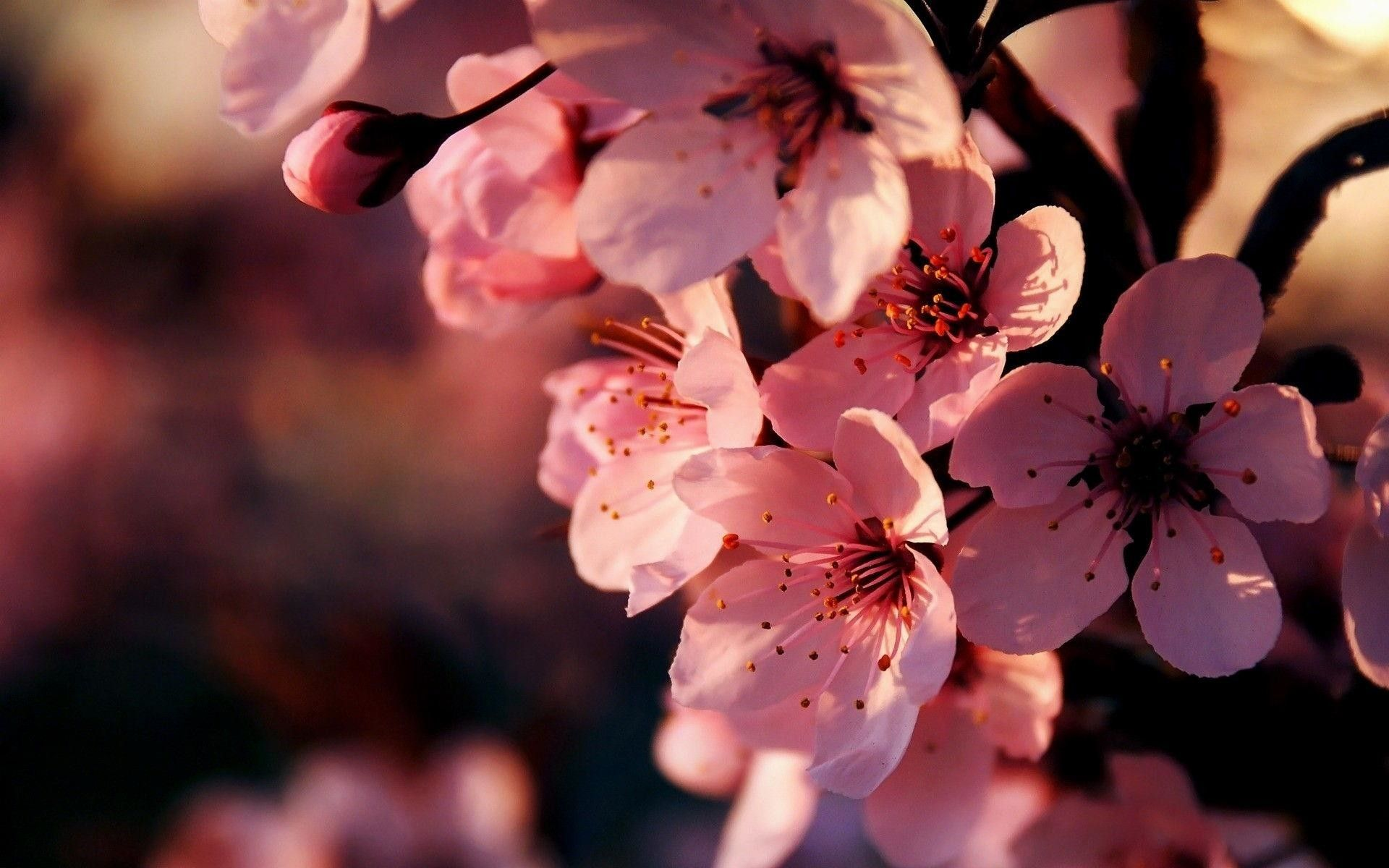 Flowers Hd Images