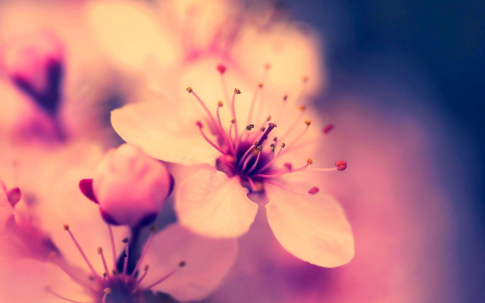 Flowers HD Wallpapers - HD Images New
