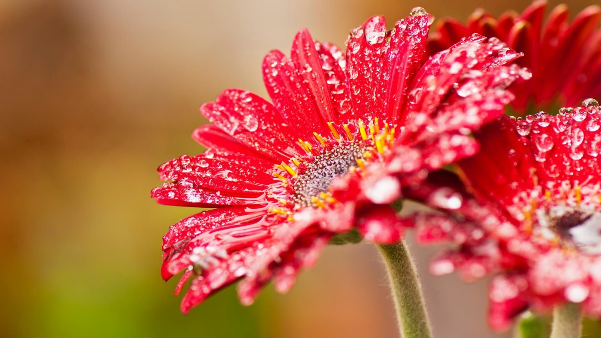 flowers-wallpapers-hd-1080p