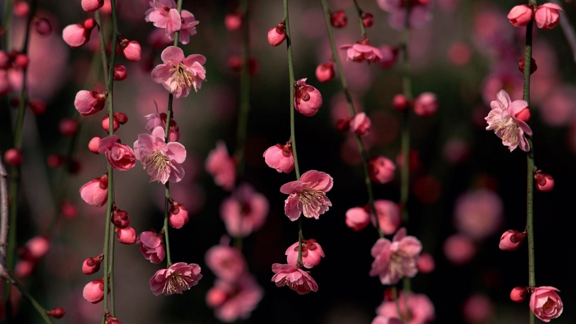 Beautiful Free HD Flower Wallpapers