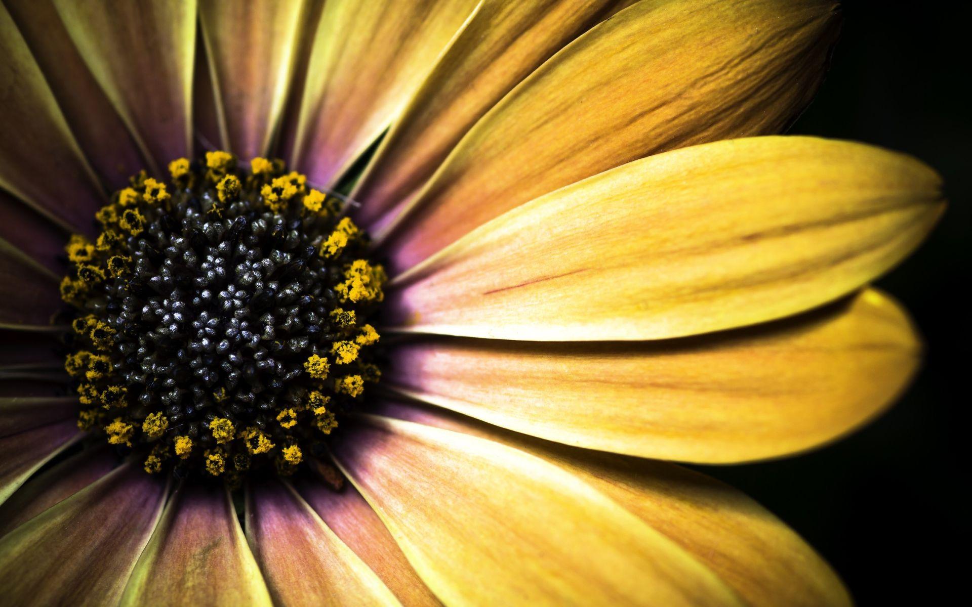 Flower Macro HD Wallpapers Pack Download