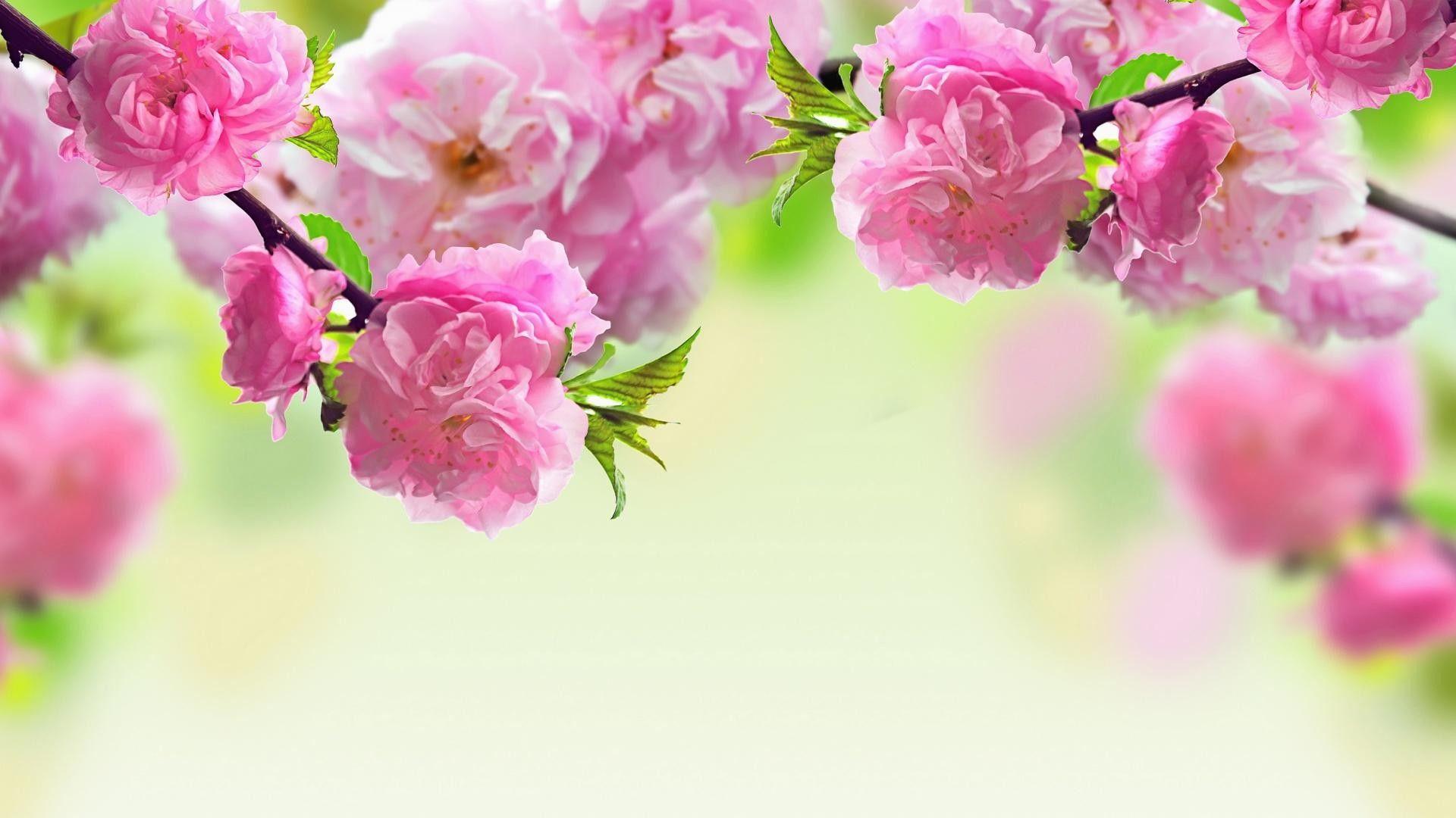 37 Spring Flower Hd Wallpapers Wallpaperboat