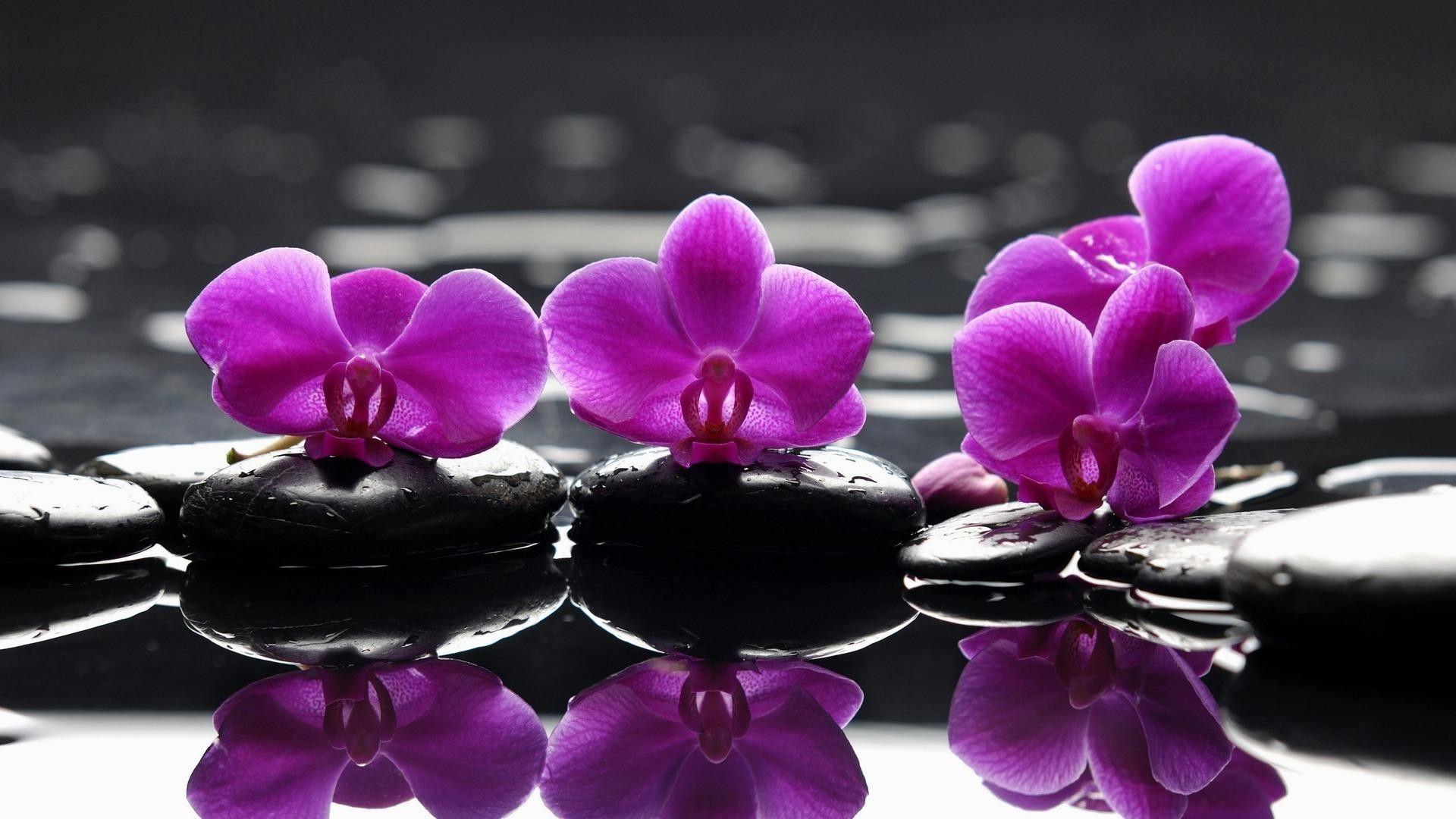 flower wallpaper hd download free