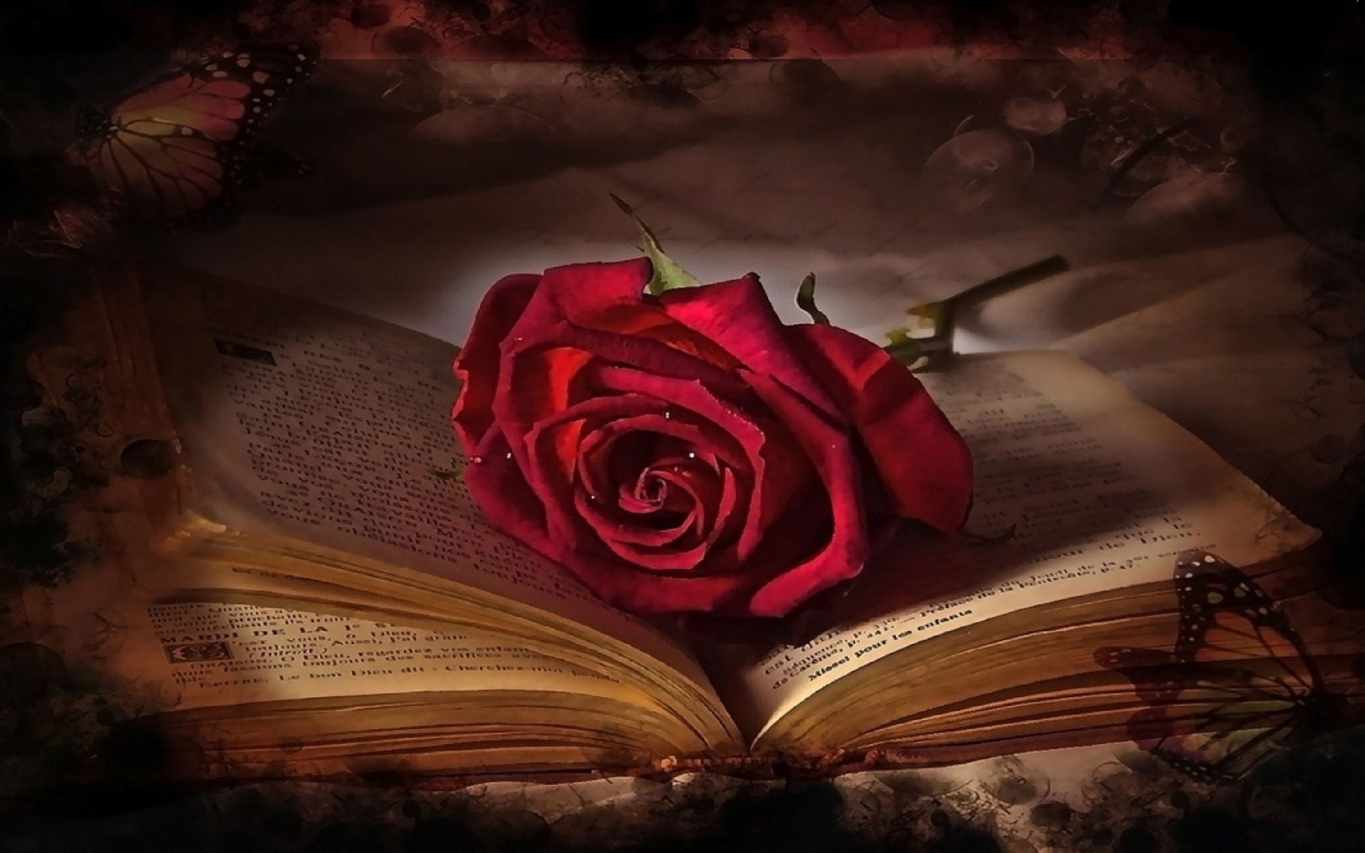 single red rose and book