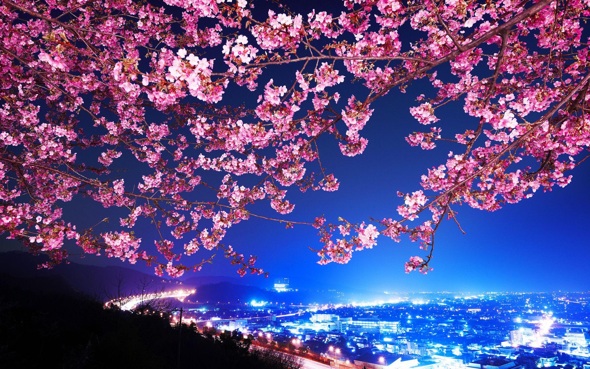 Best Sakura Wallpaper