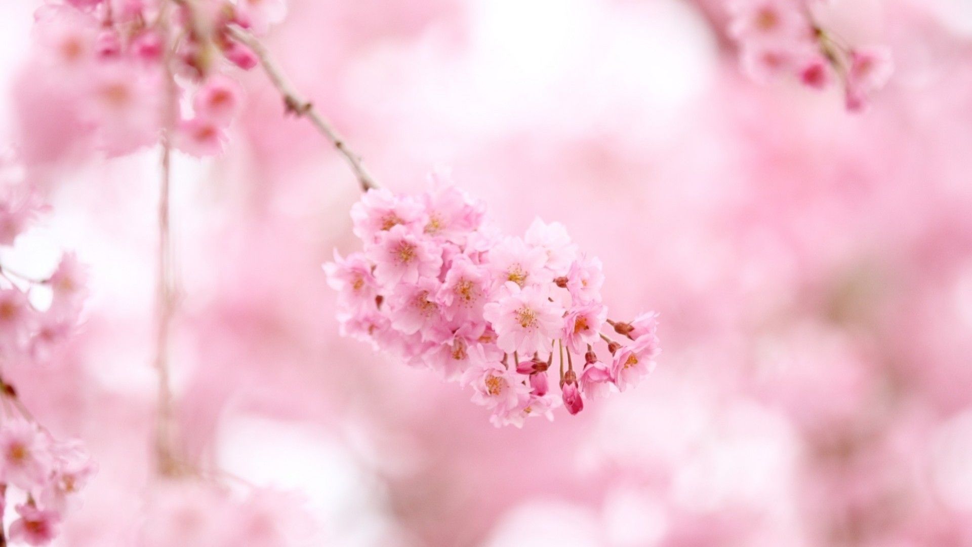 HD Blossom Pictures