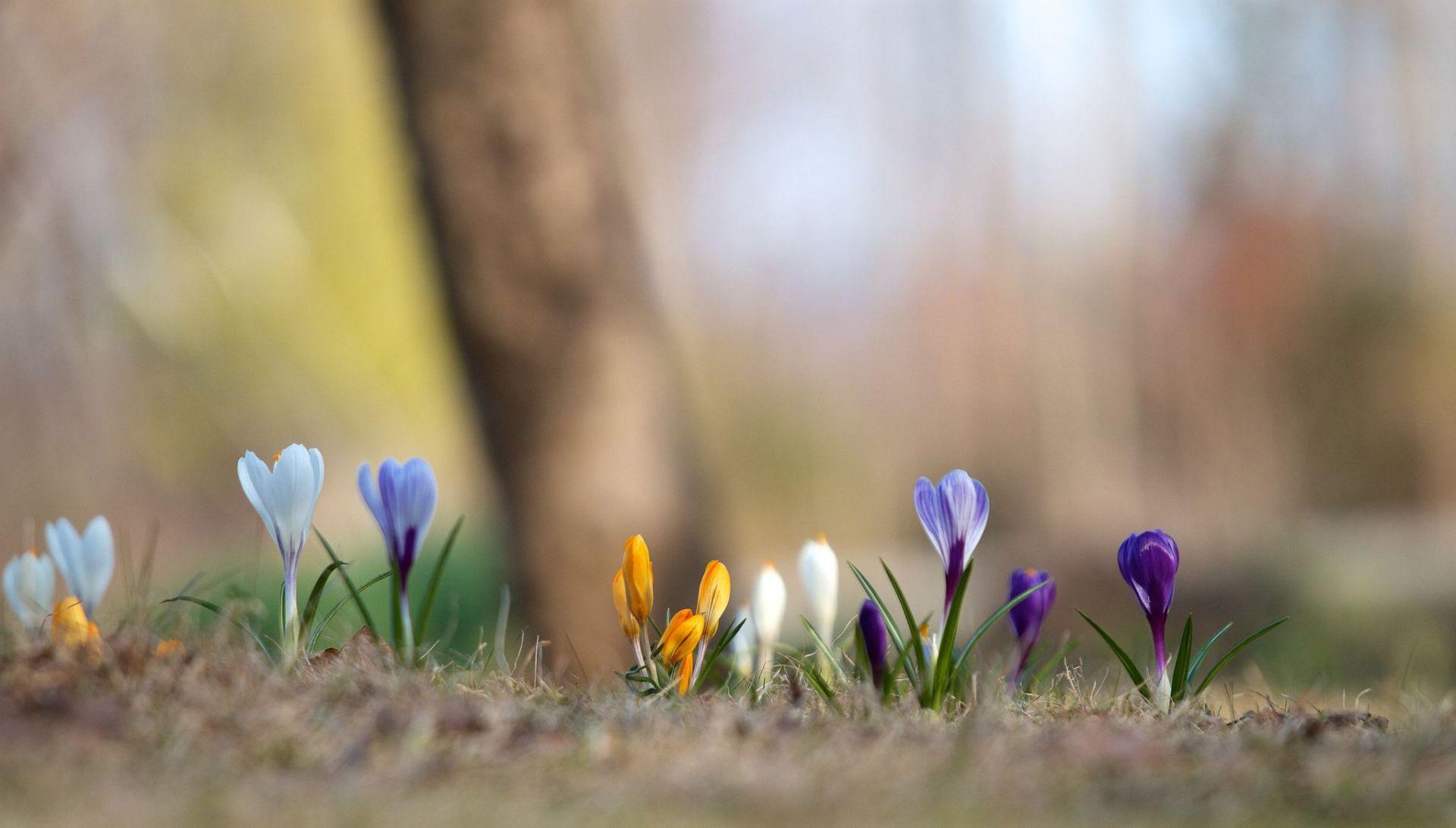 Original Spring Images
