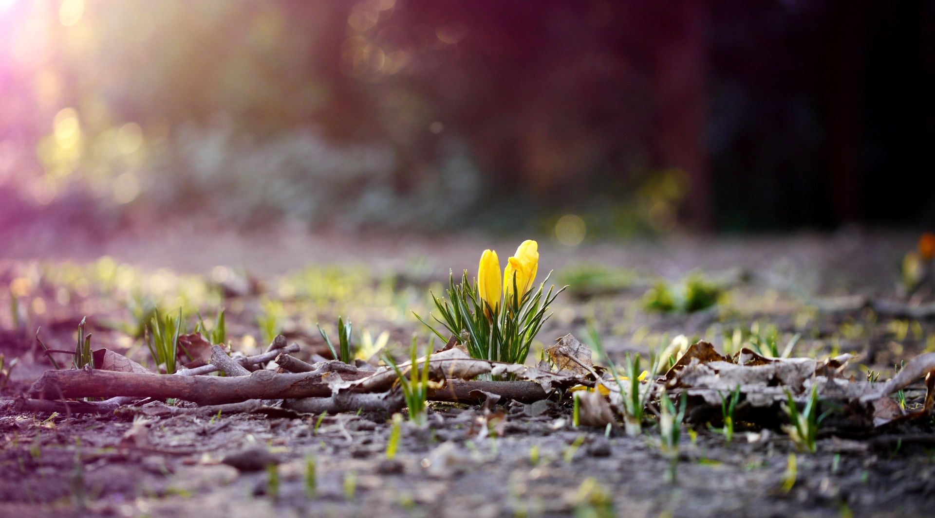 Awesome Spring Images