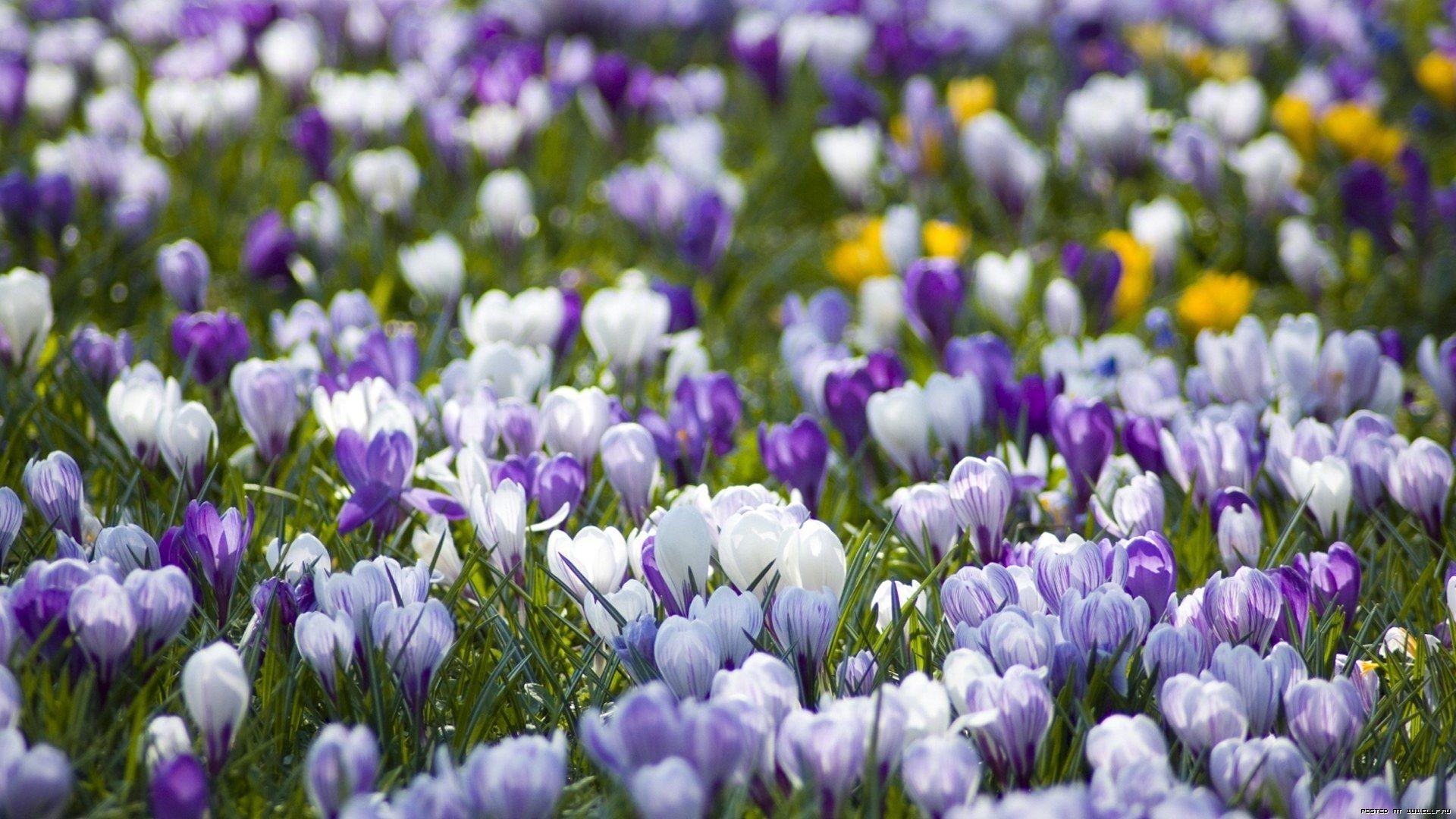 Free download Spring Images