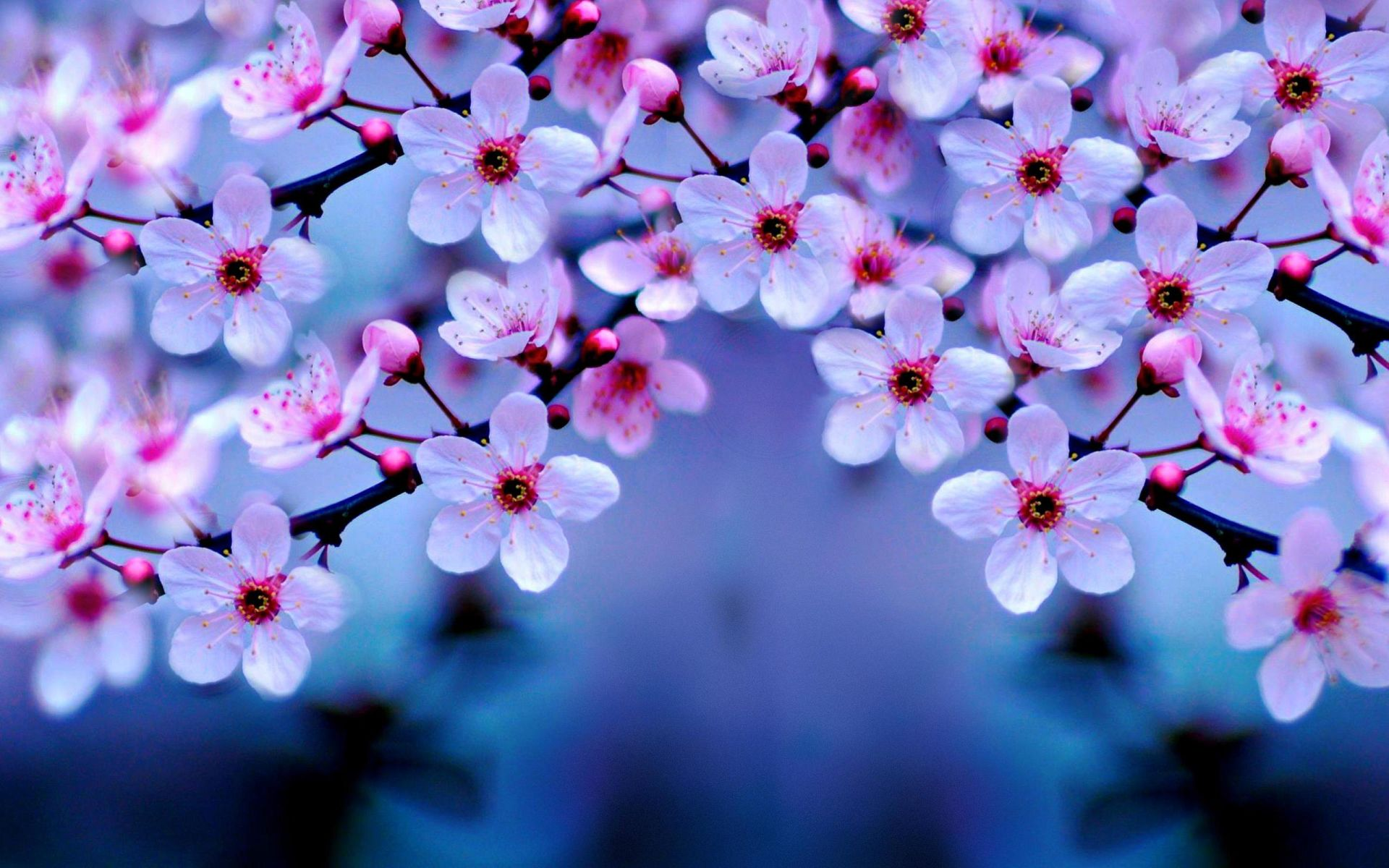 Free Download Spring Images for Desktop