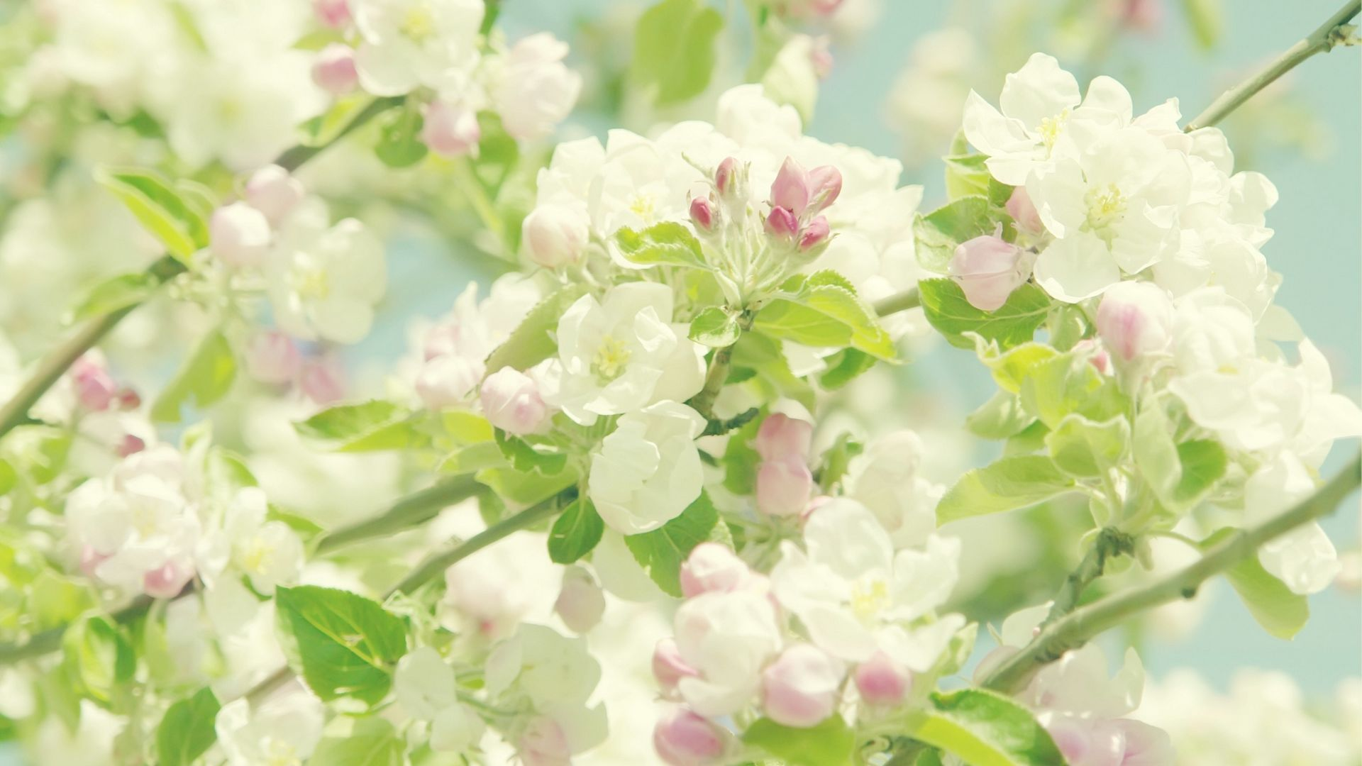HD spring image