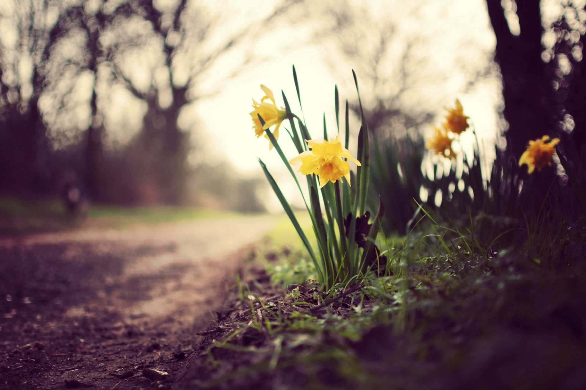 Beautiful Spring Landscape Images