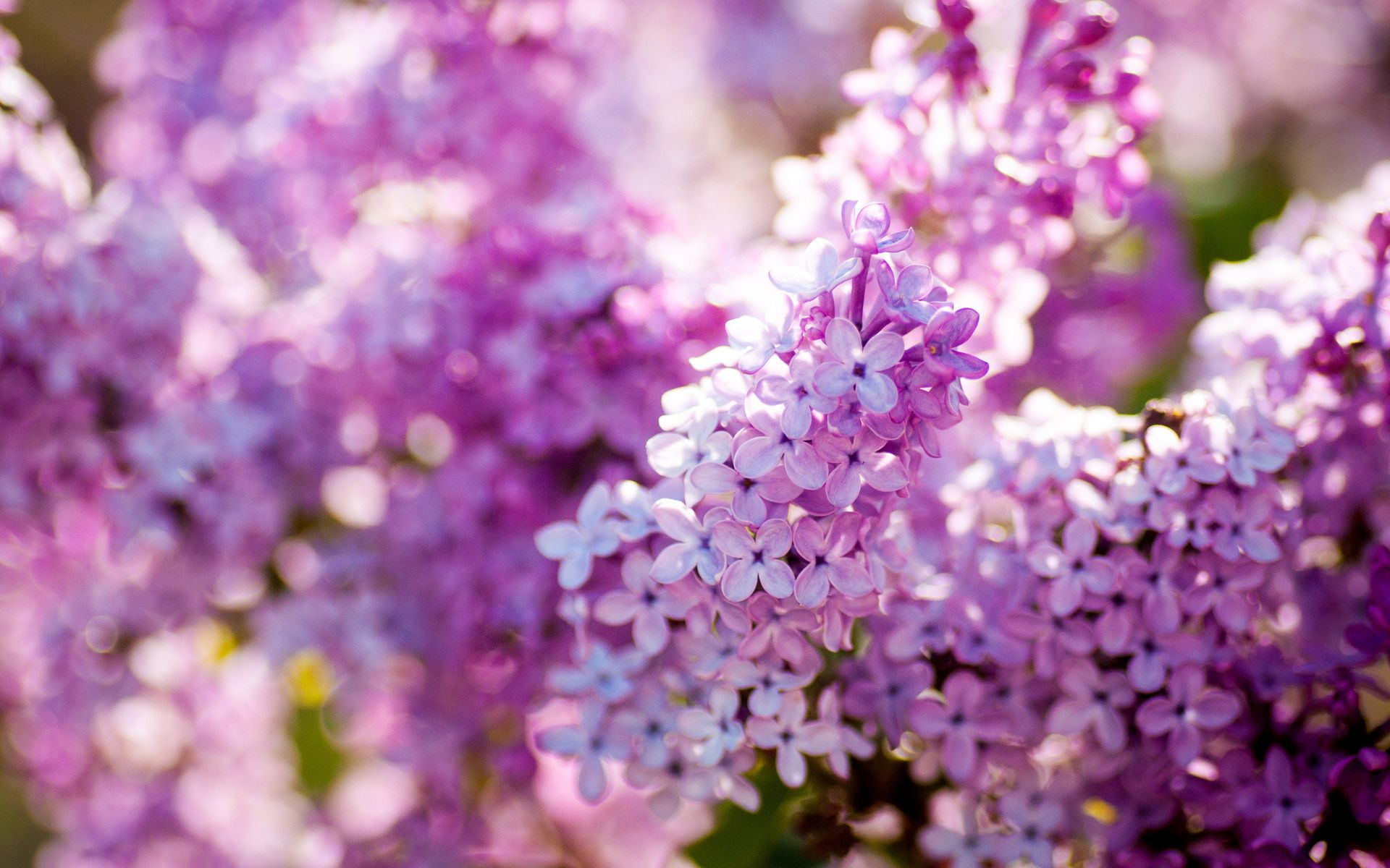 Spring HD Desktop wallpaper