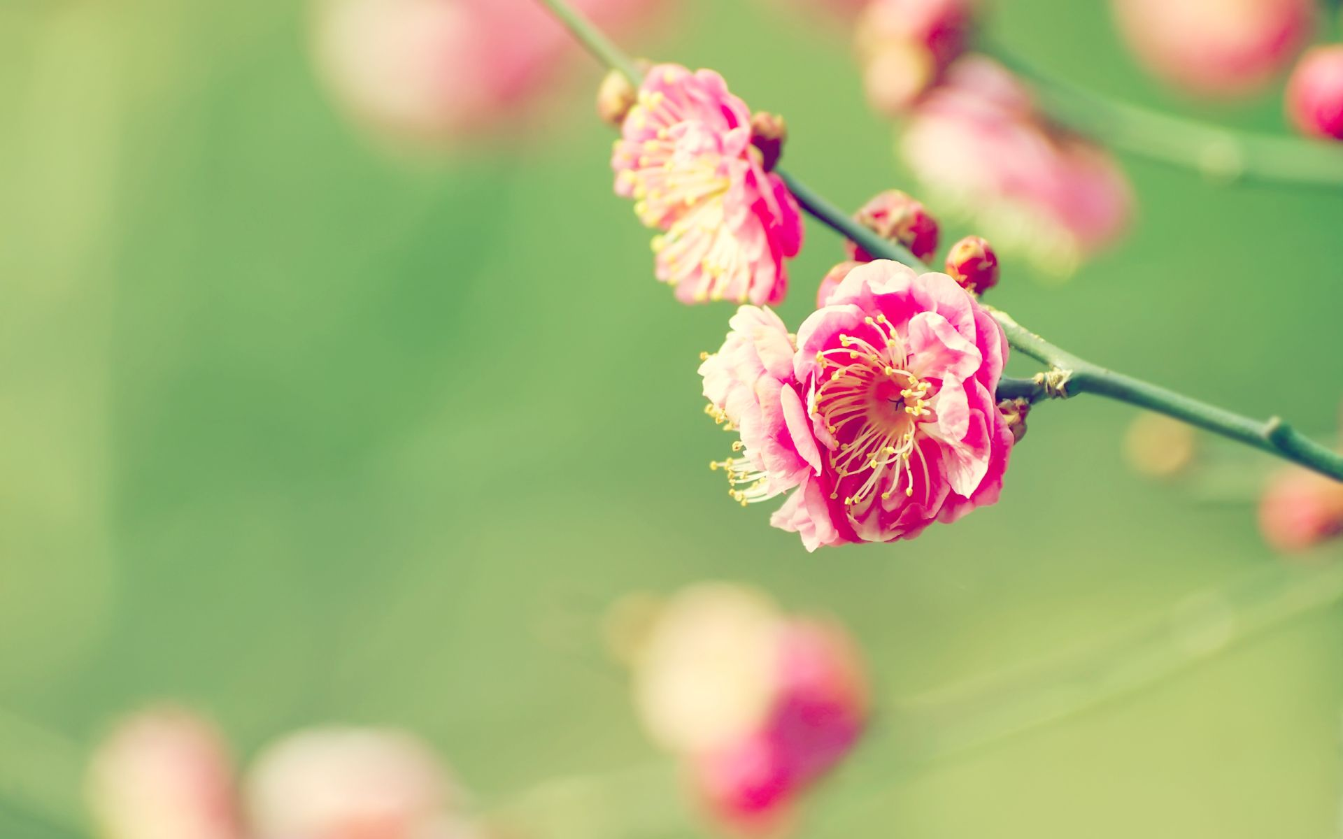 Spring Images