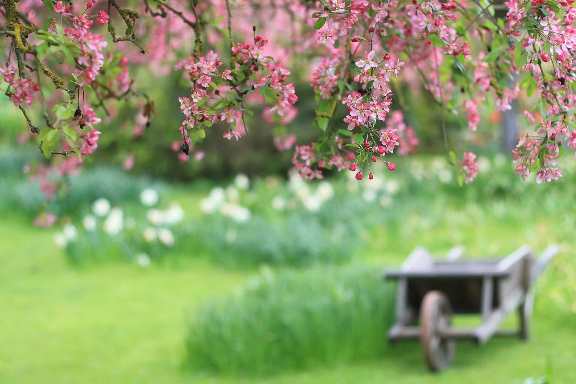 Spring Flowers Background HD