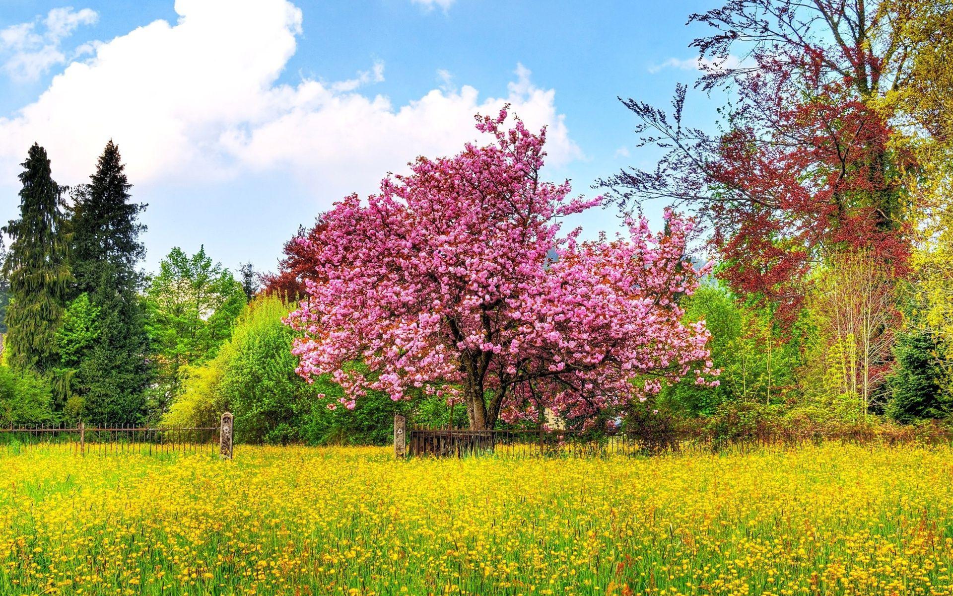 Spring Season Desktop Wallpaper