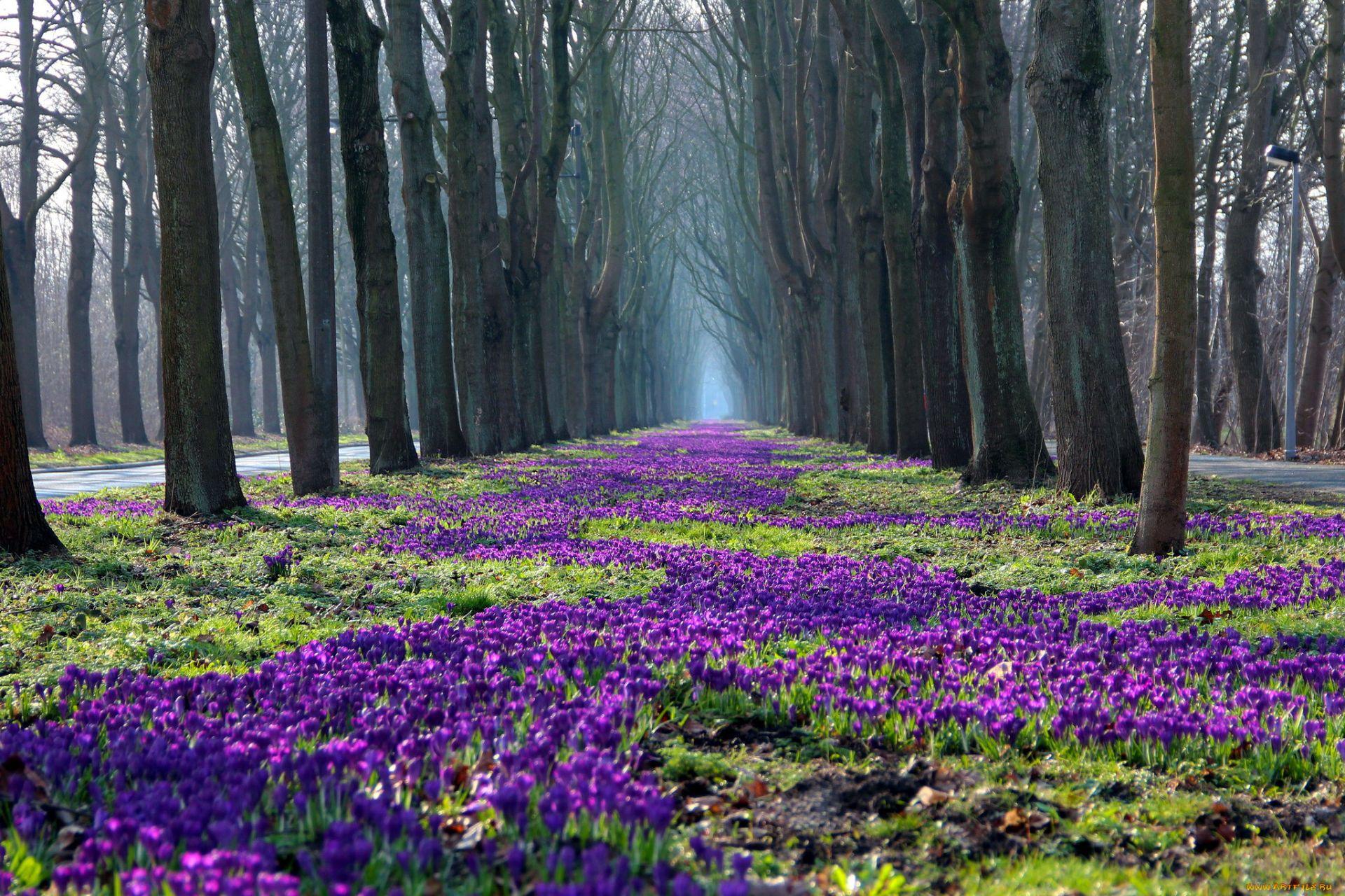 Spring Season Wallpaper