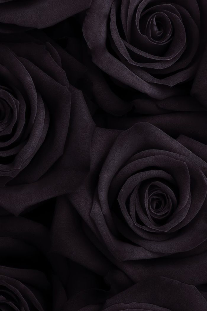 black rose wallpaper iphone