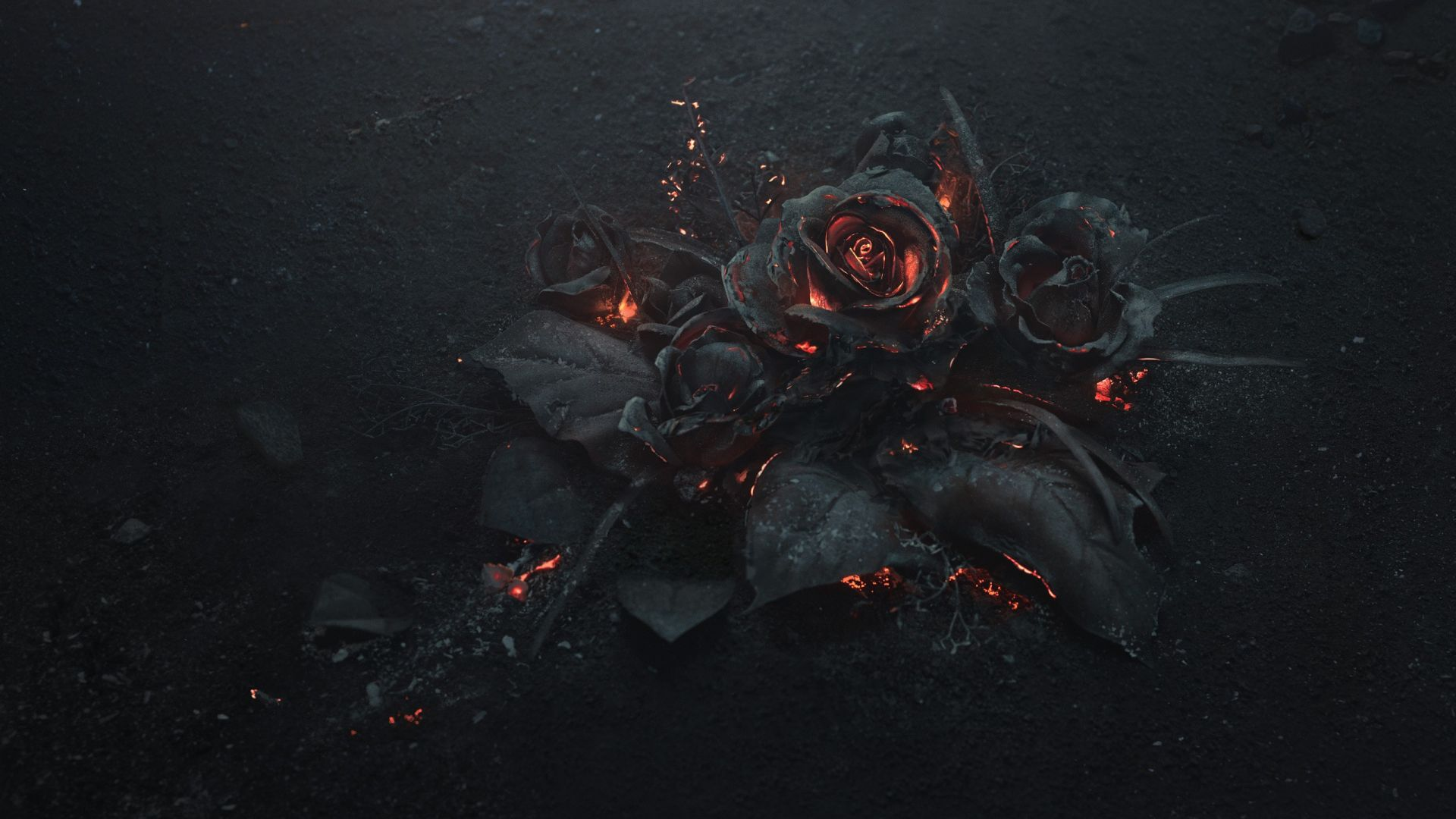 black rose wallpaper hd