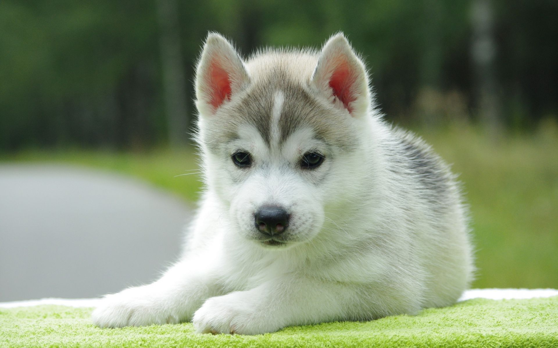 45 Cute Dog Wallpapers Wallpaperboat