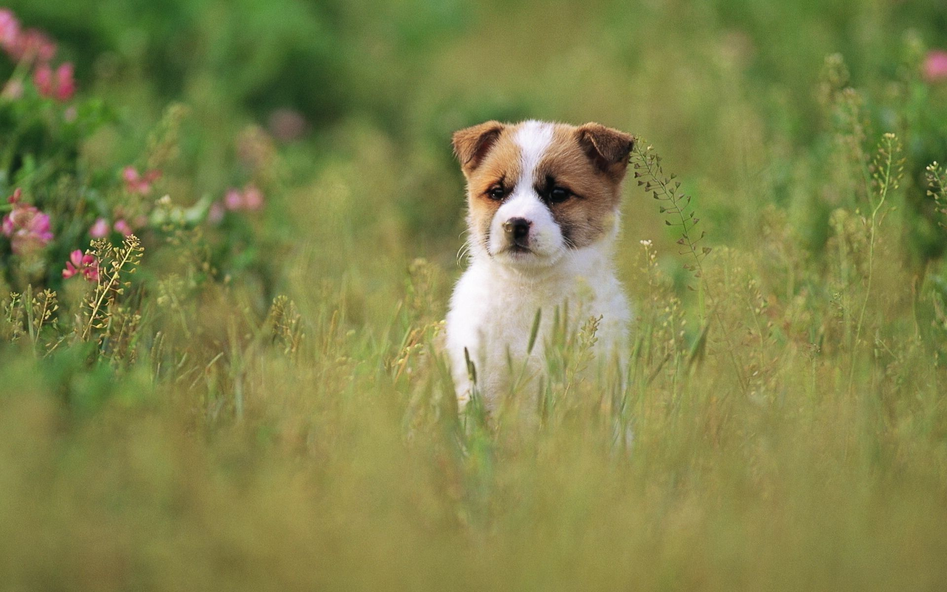 cute dog pictures for wallpaper