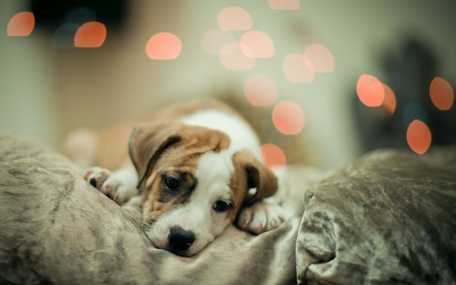 cute dog wallpapers free