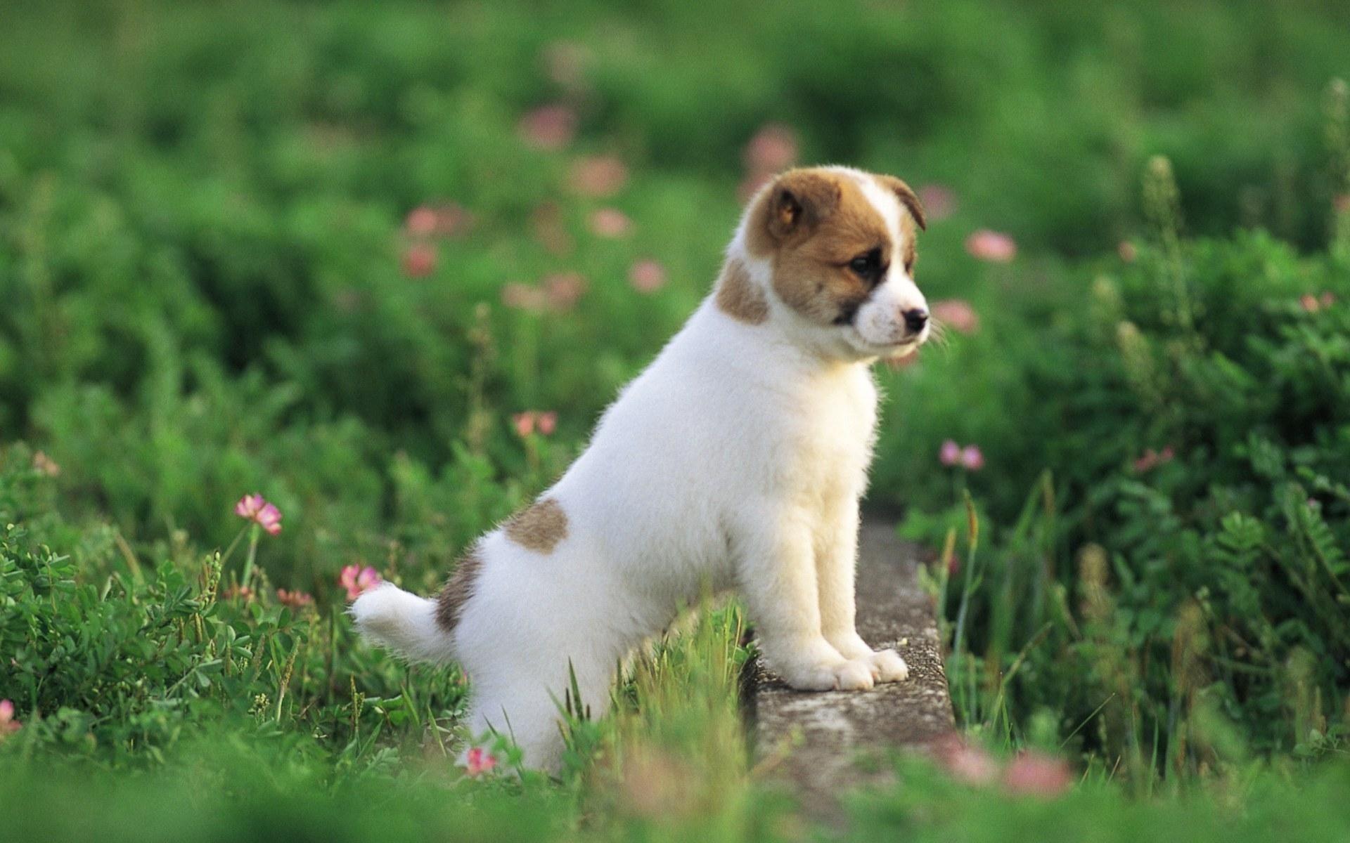 cute dog puppy hd wallpaper