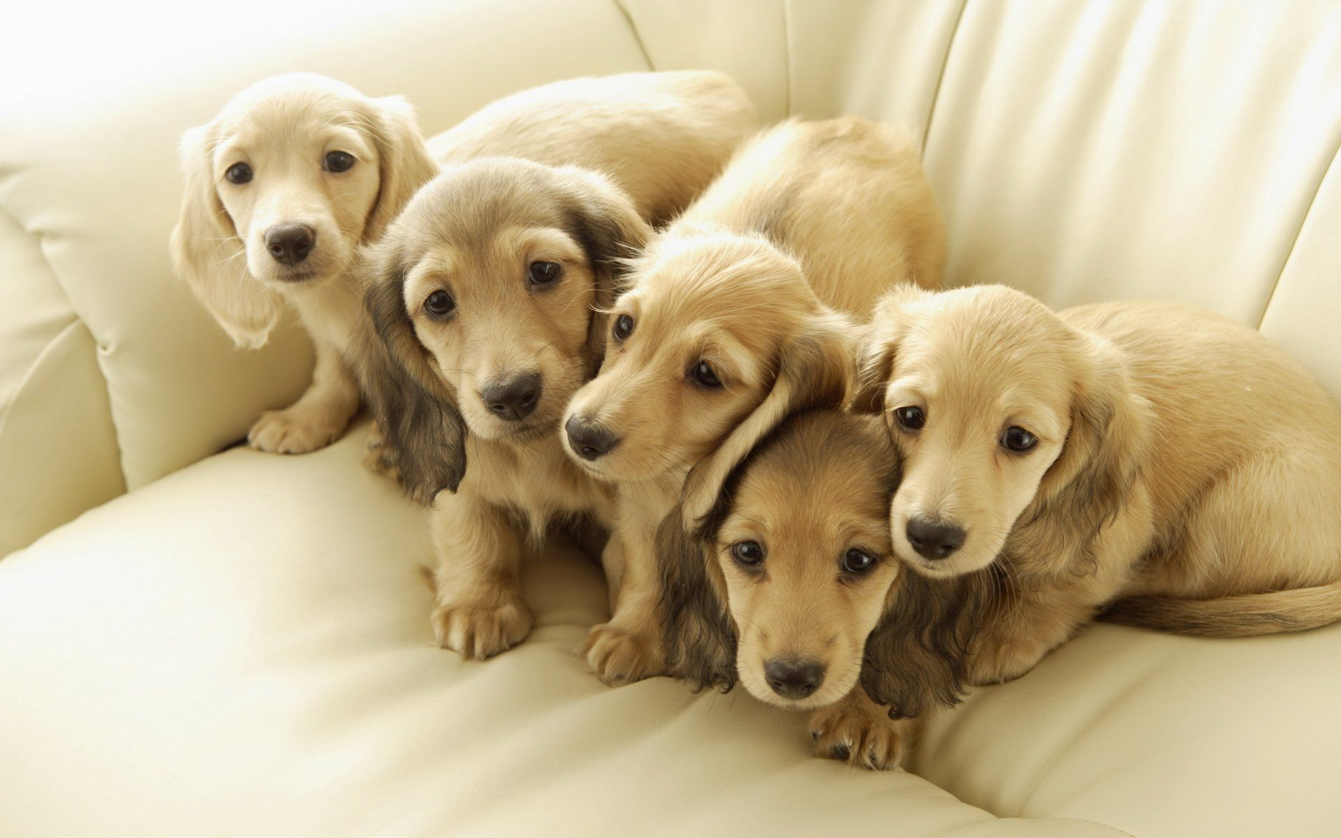 cute wallpapers of dogs and puppies