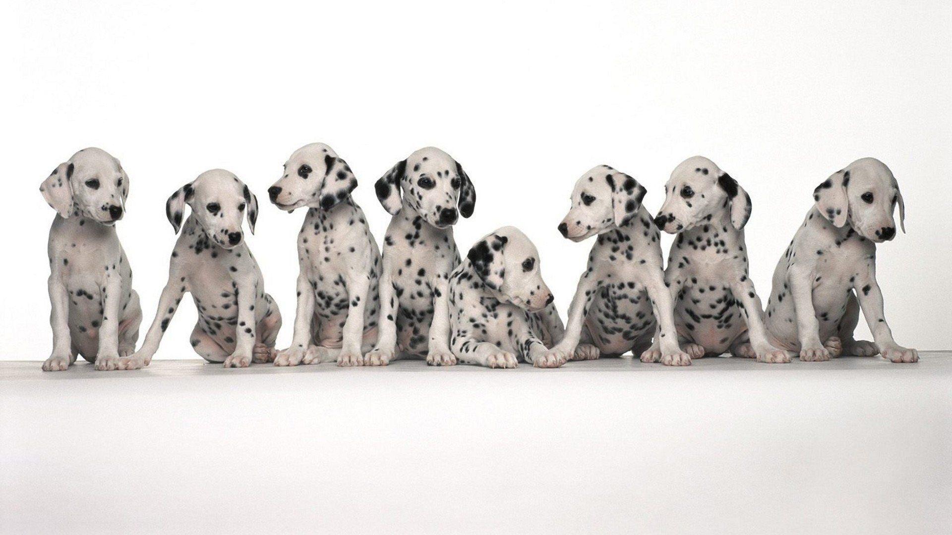 cute baby dogs wallpaper hd