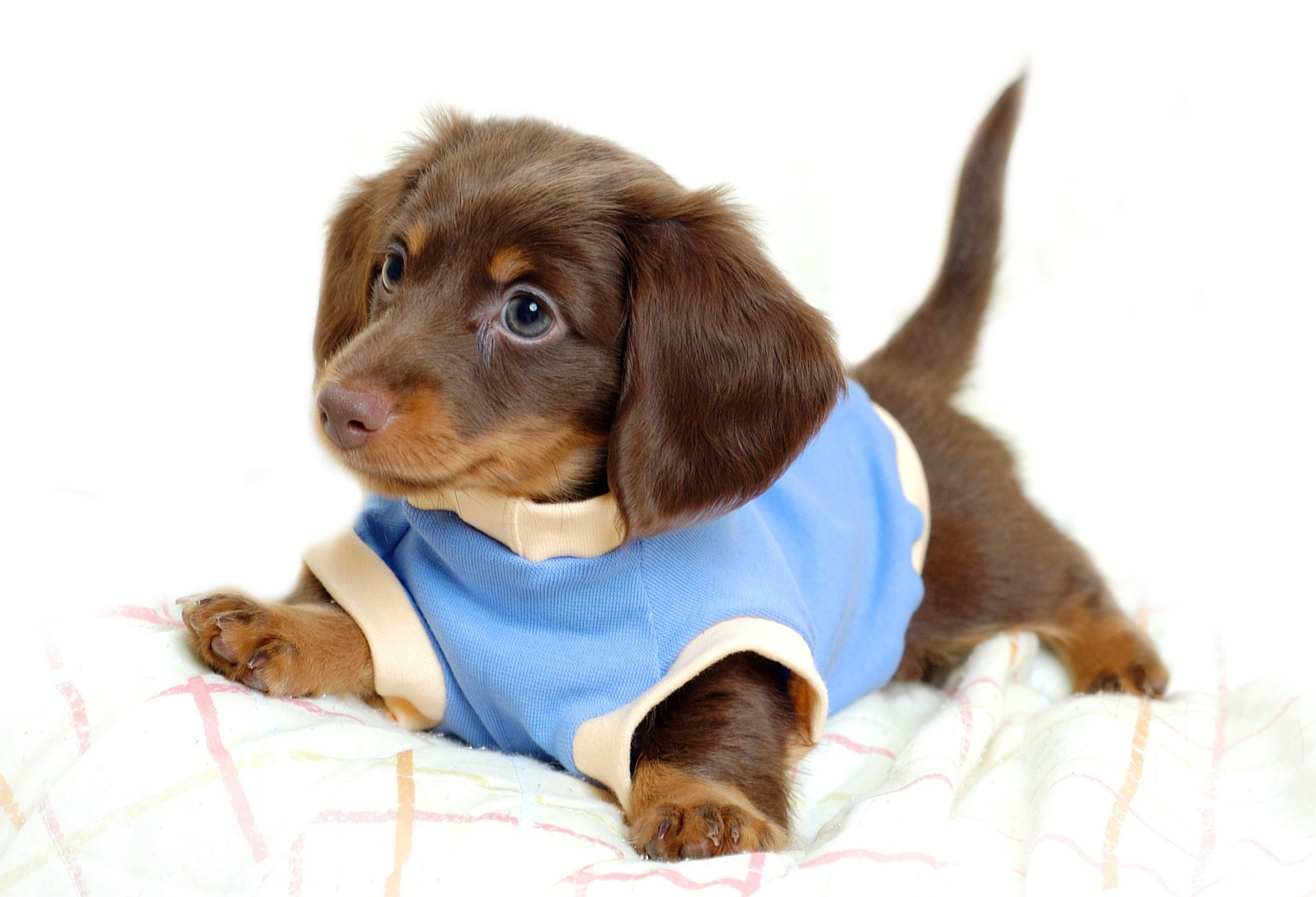 cute dog baby hd wallpaper