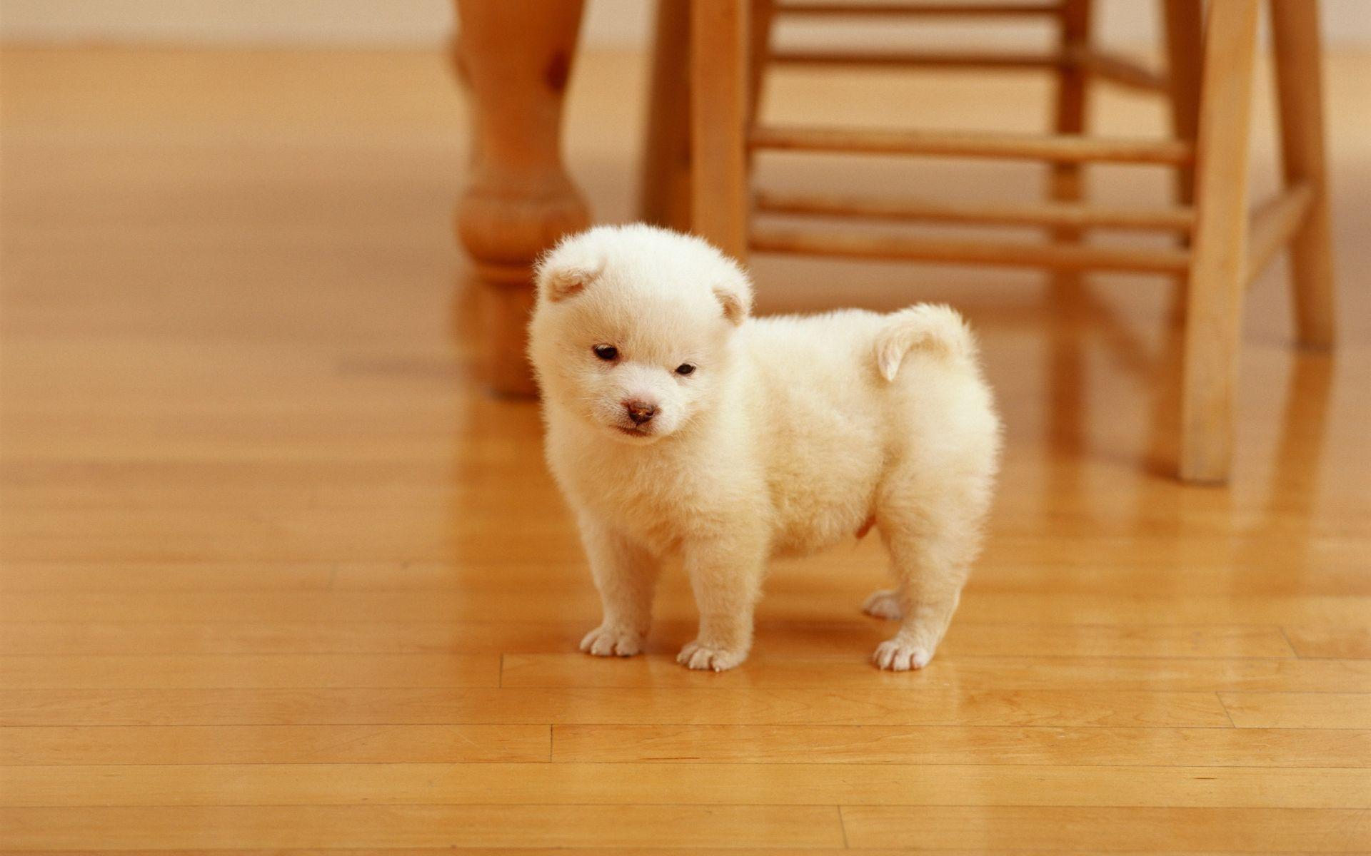 desktop wallpaper cute dog