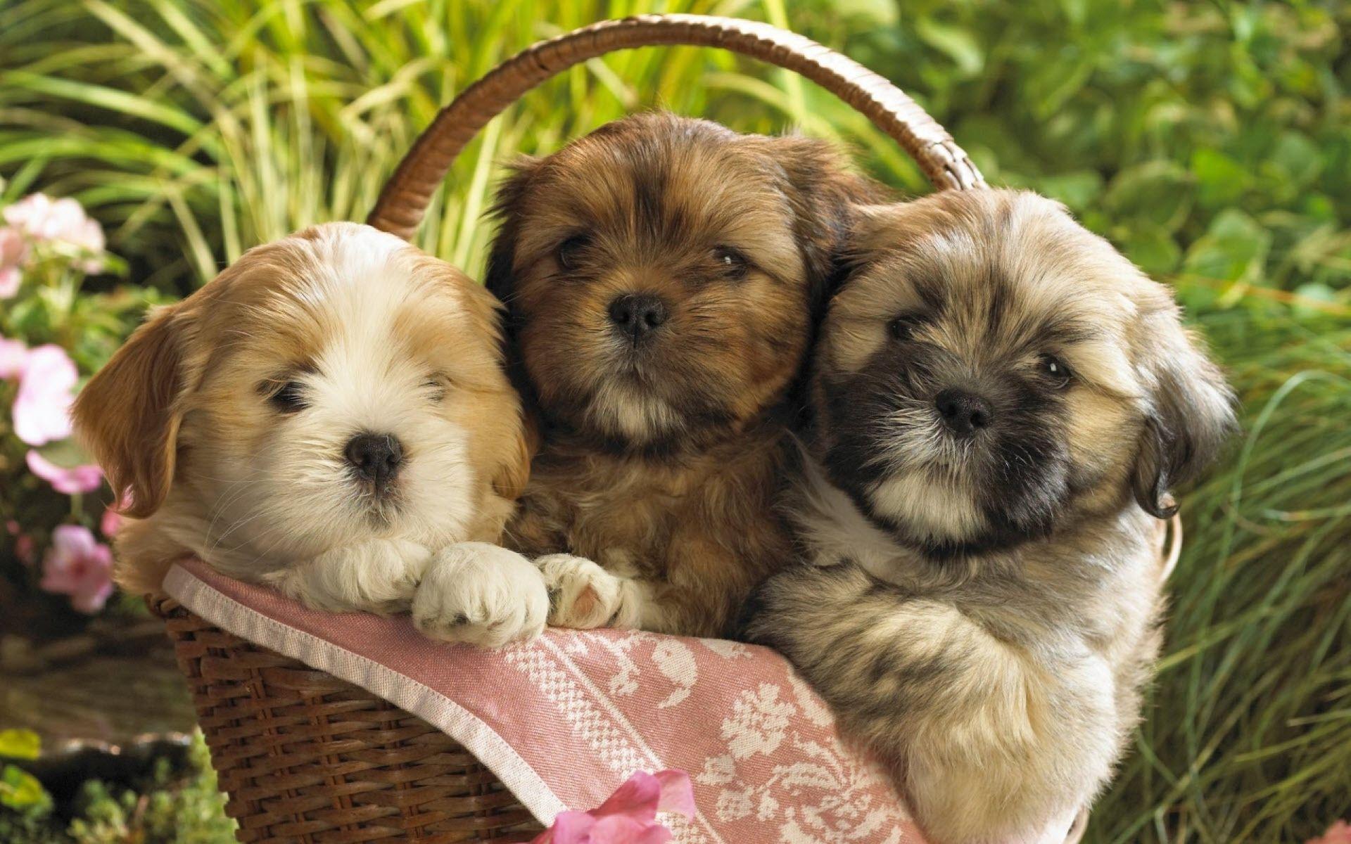 cute wallpaper dogs
