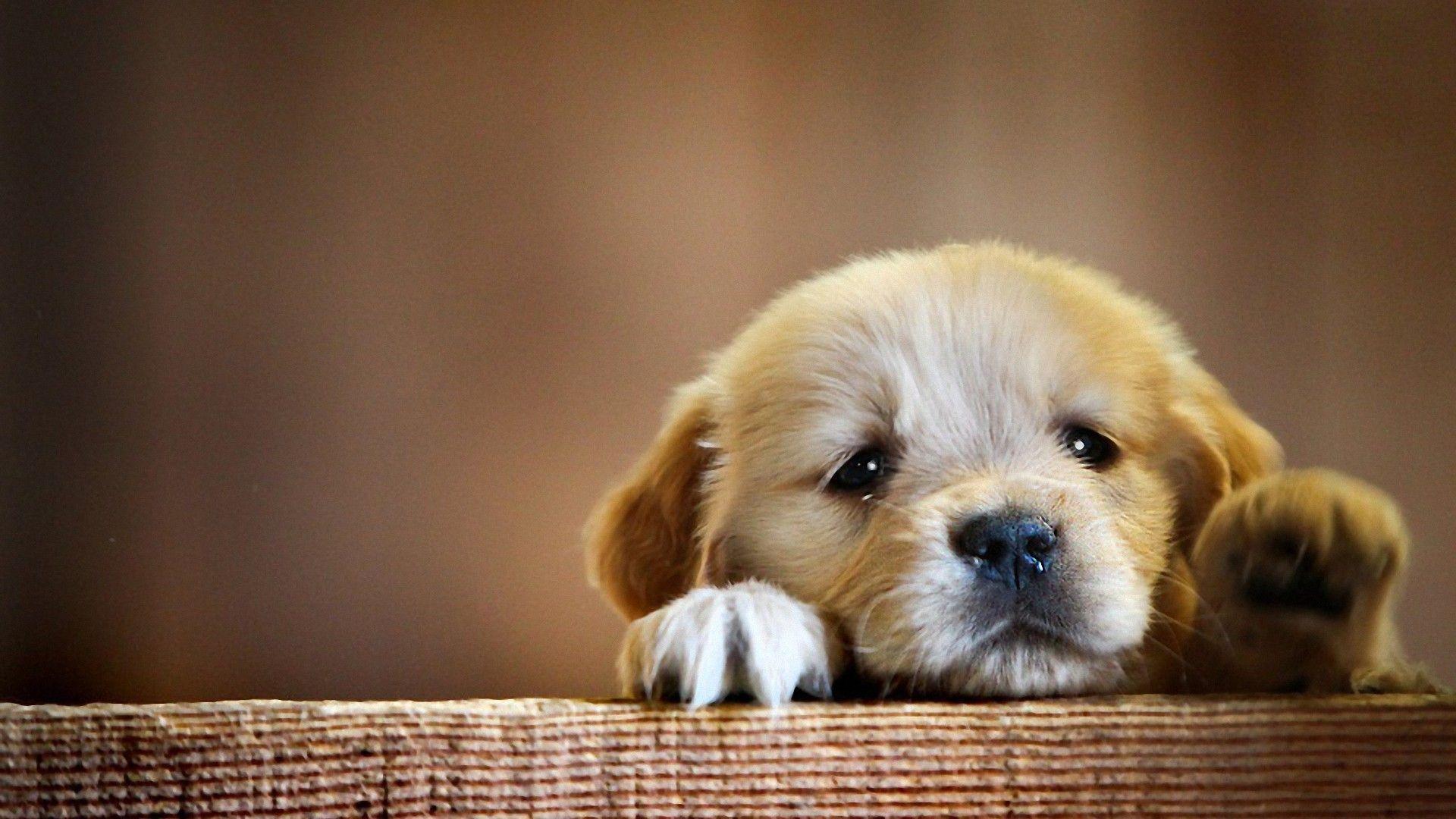 cute dog hd wallpaper 1080p
