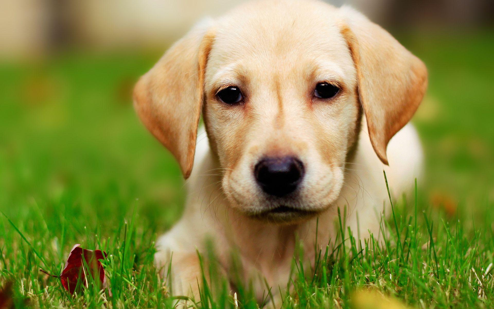 cute dog picture wallpaper