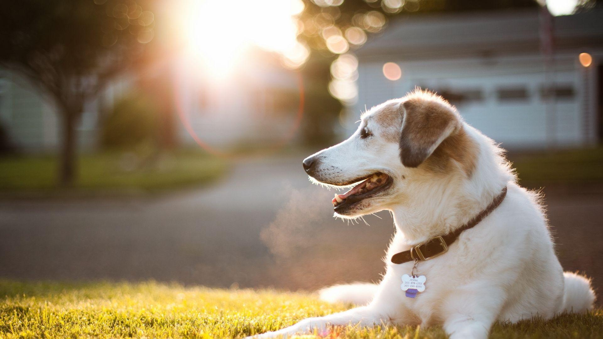 cute dog wallpaper download