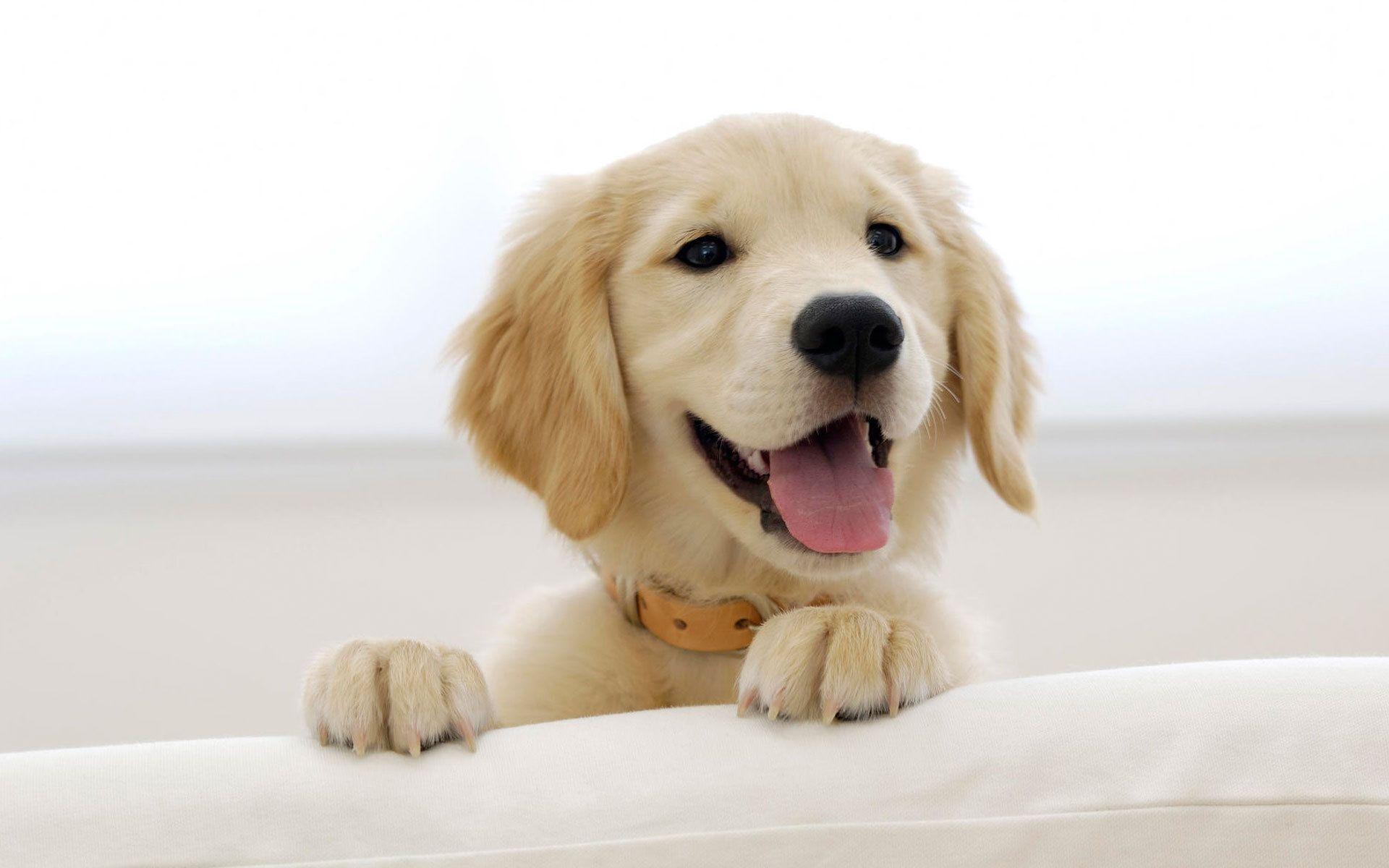 cute dog wallpaper free download
