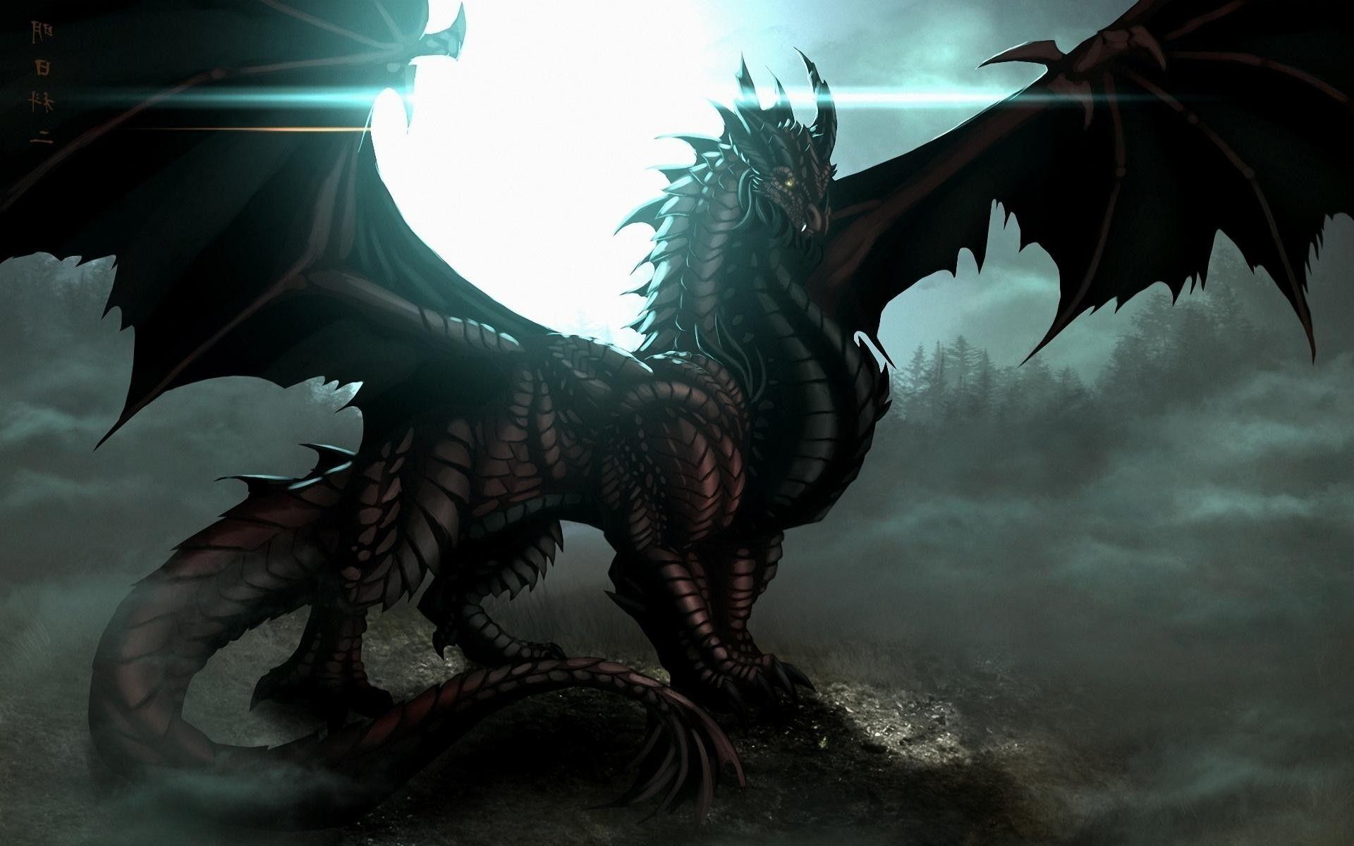 dragon photo com