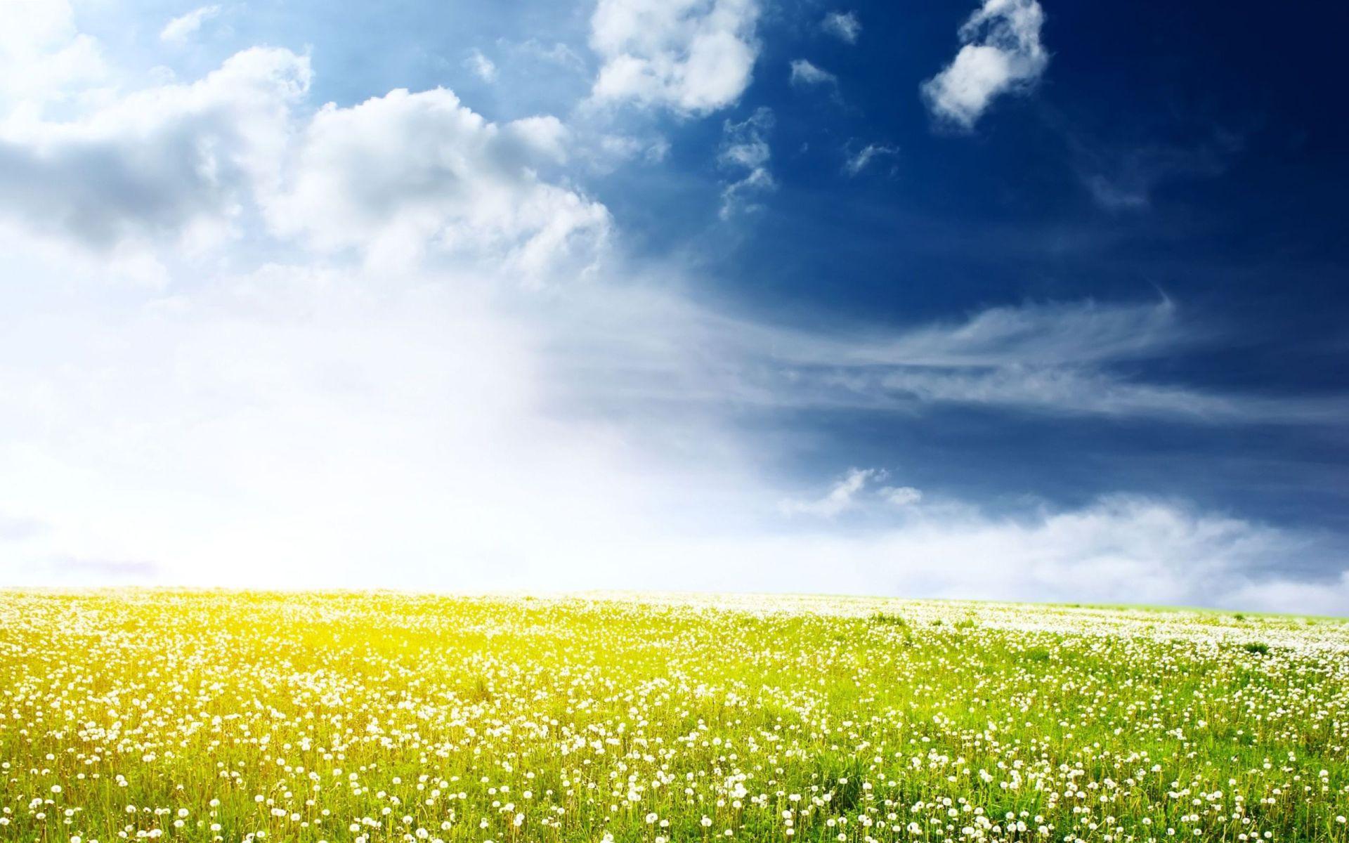 Flower Field Desktop Background