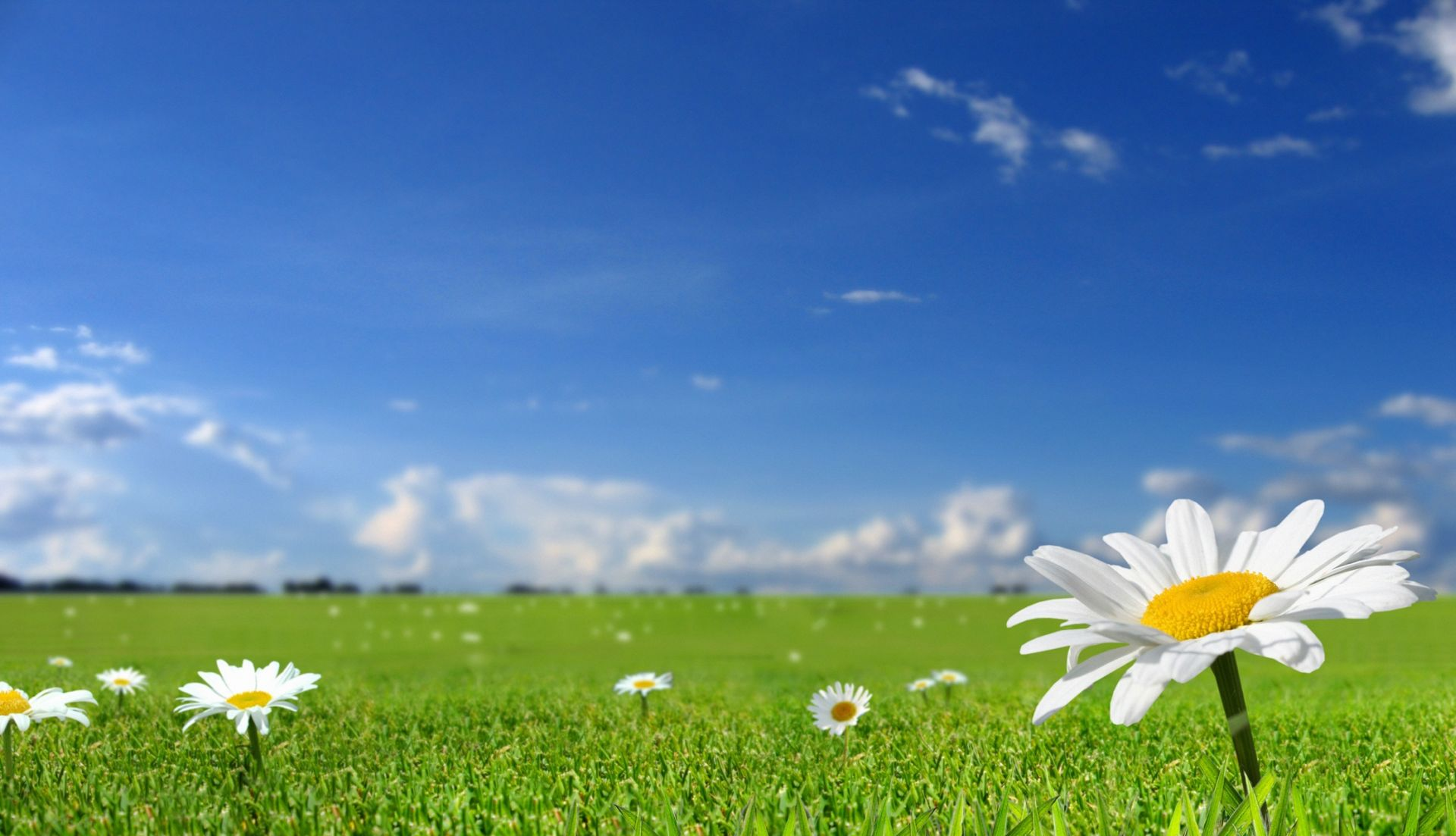 summer blue sky and grass with flowers