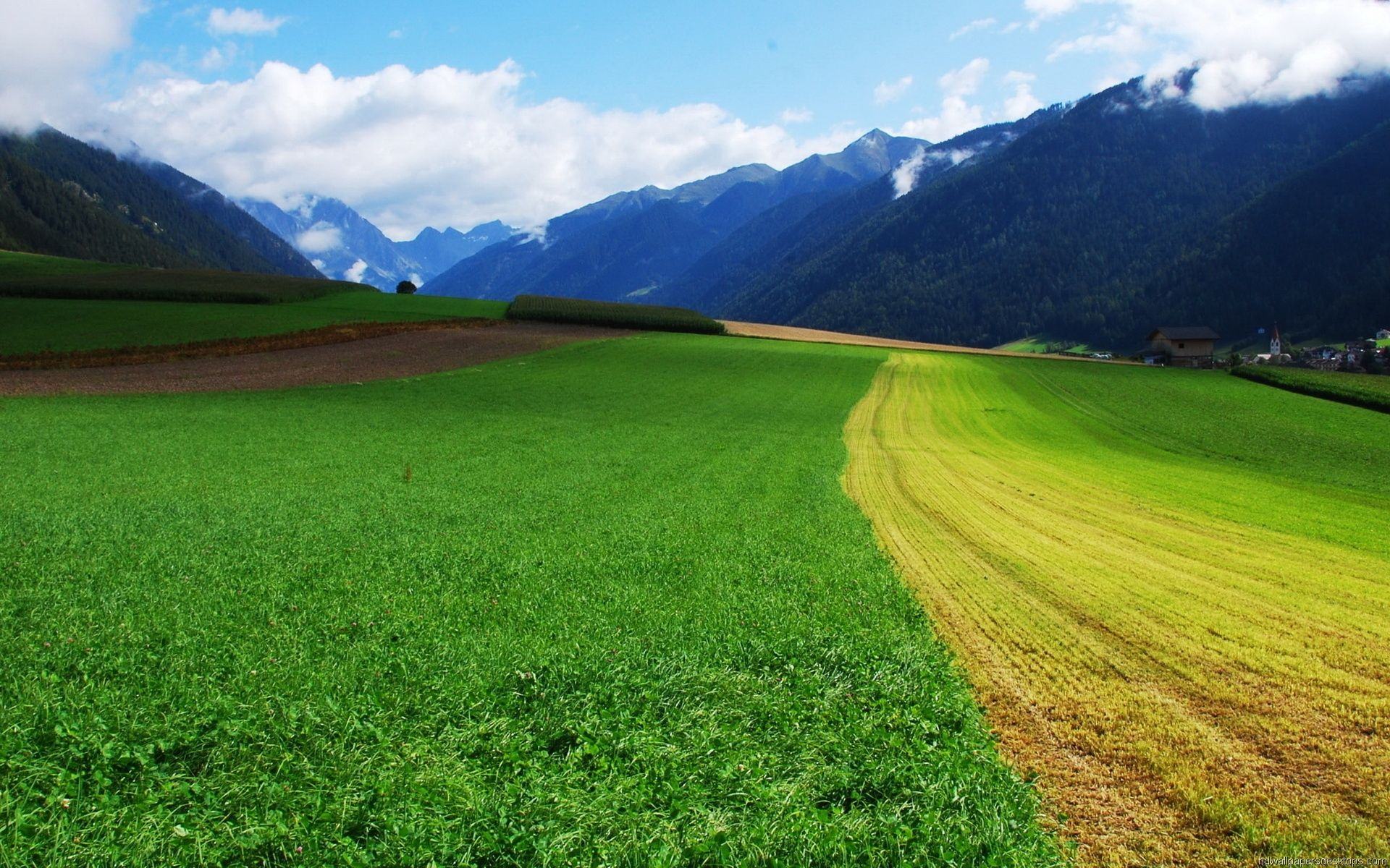 summer natural landscape with green grass and mountains
