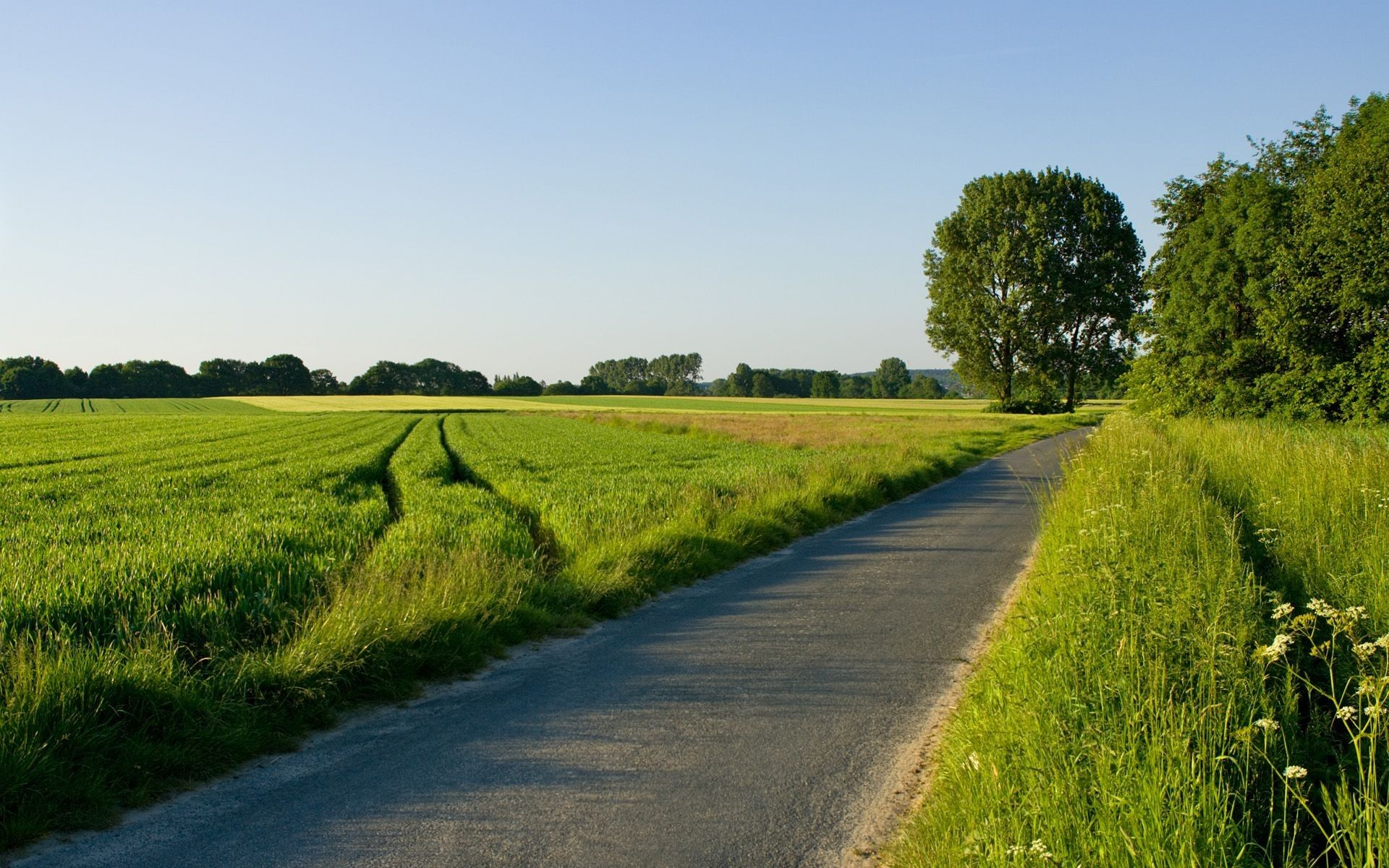 nature landscape with road and green grass and blus sky