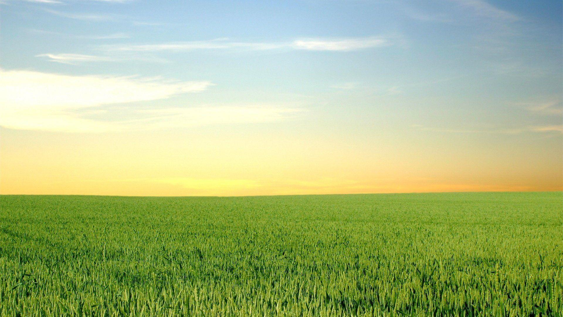 green grass and blus sky wallpaper