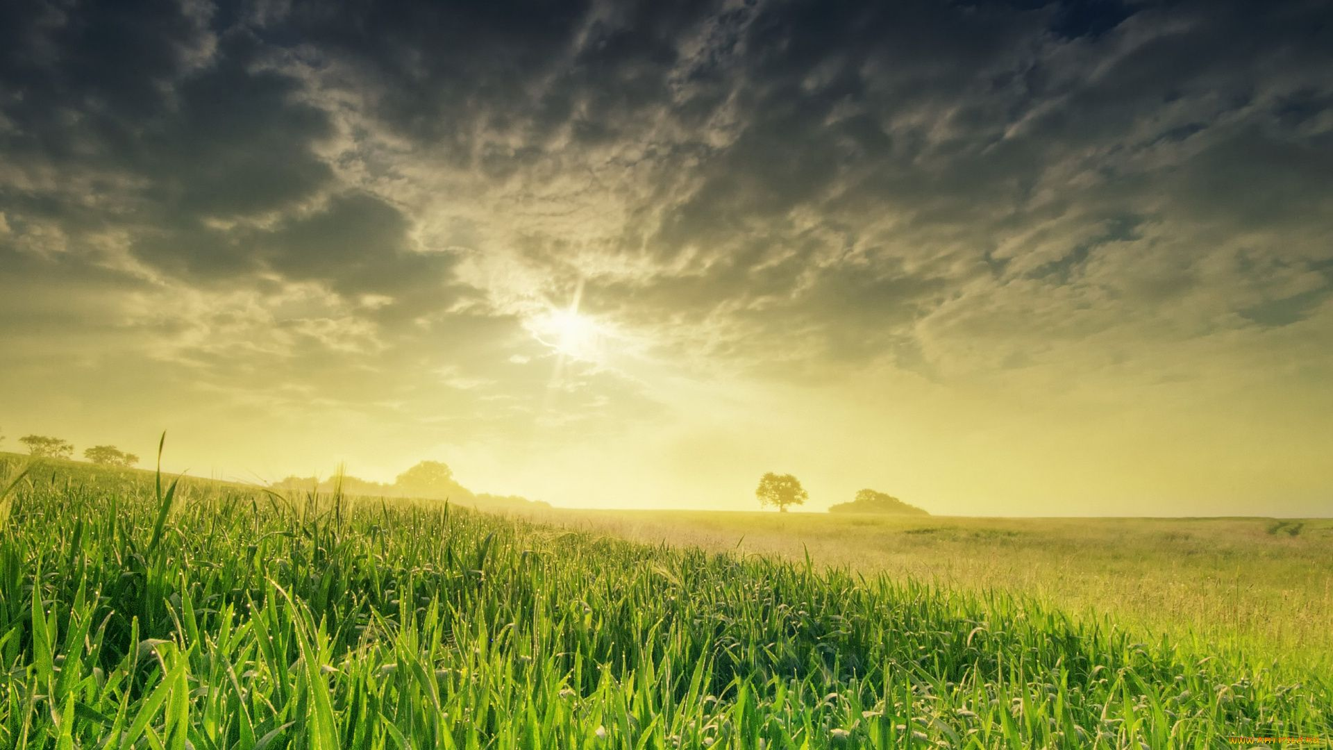 nature wallpaper with grass and sky